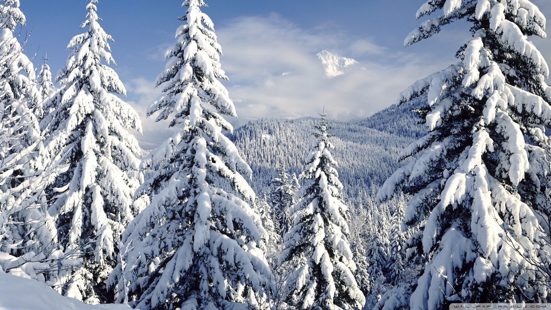Res: 1920x1080, Snowy Trees Wallpaper