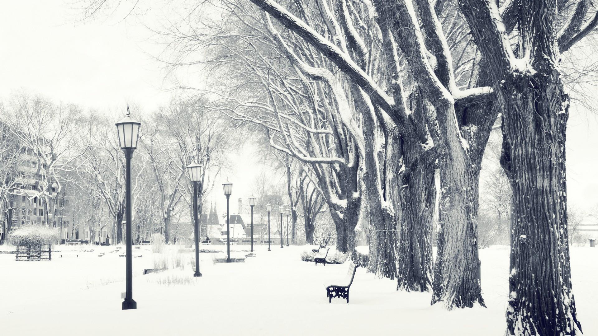 Res: 1920x1080, Snowy Trees Wallpaper HD
