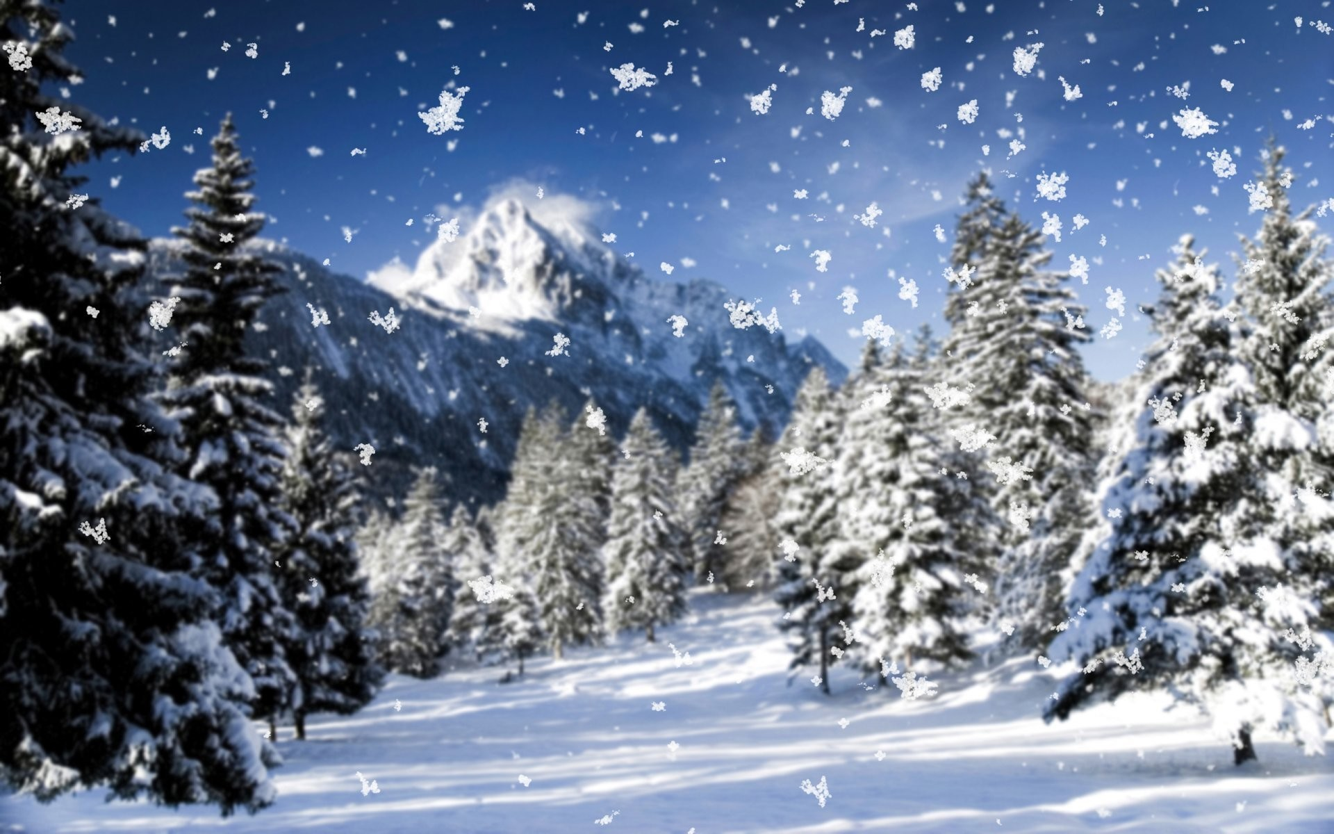 Res: 1920x1200, nature snowflakes close up snow blizzard winter winter wallpaper cool frost  tree mountain spruce christmas tree