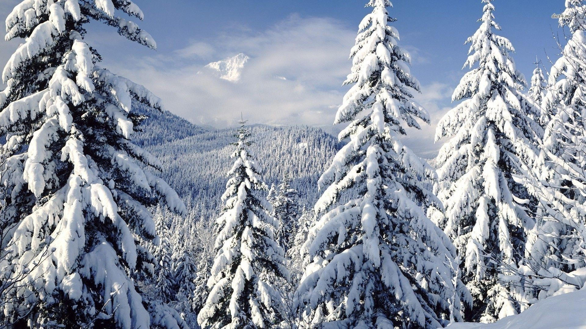 Res: 1920x1080, snowy trees wallpaper #761004