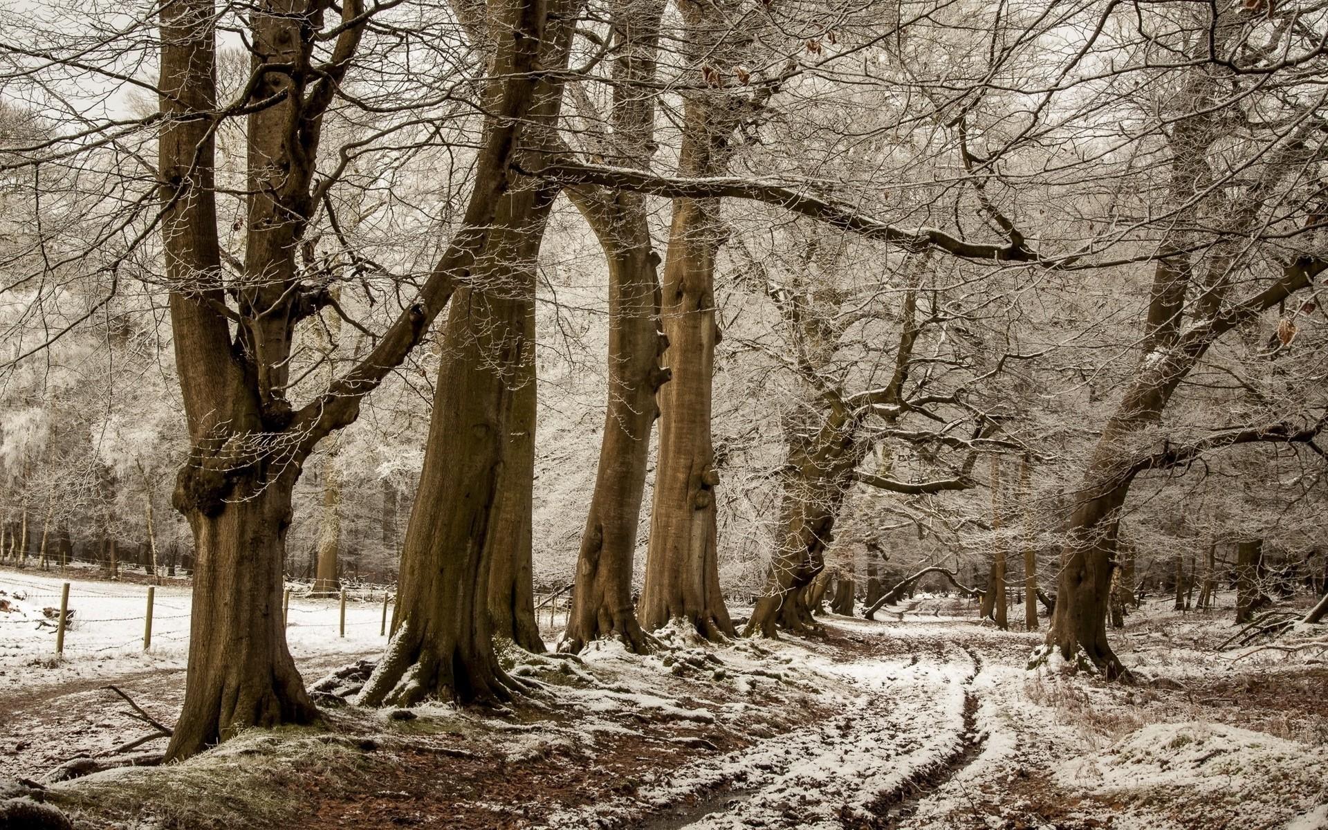 Res: 1920x1200, Bild: Brown-Bäume Weg Zaun Snowy wallpapers and stock photos. «