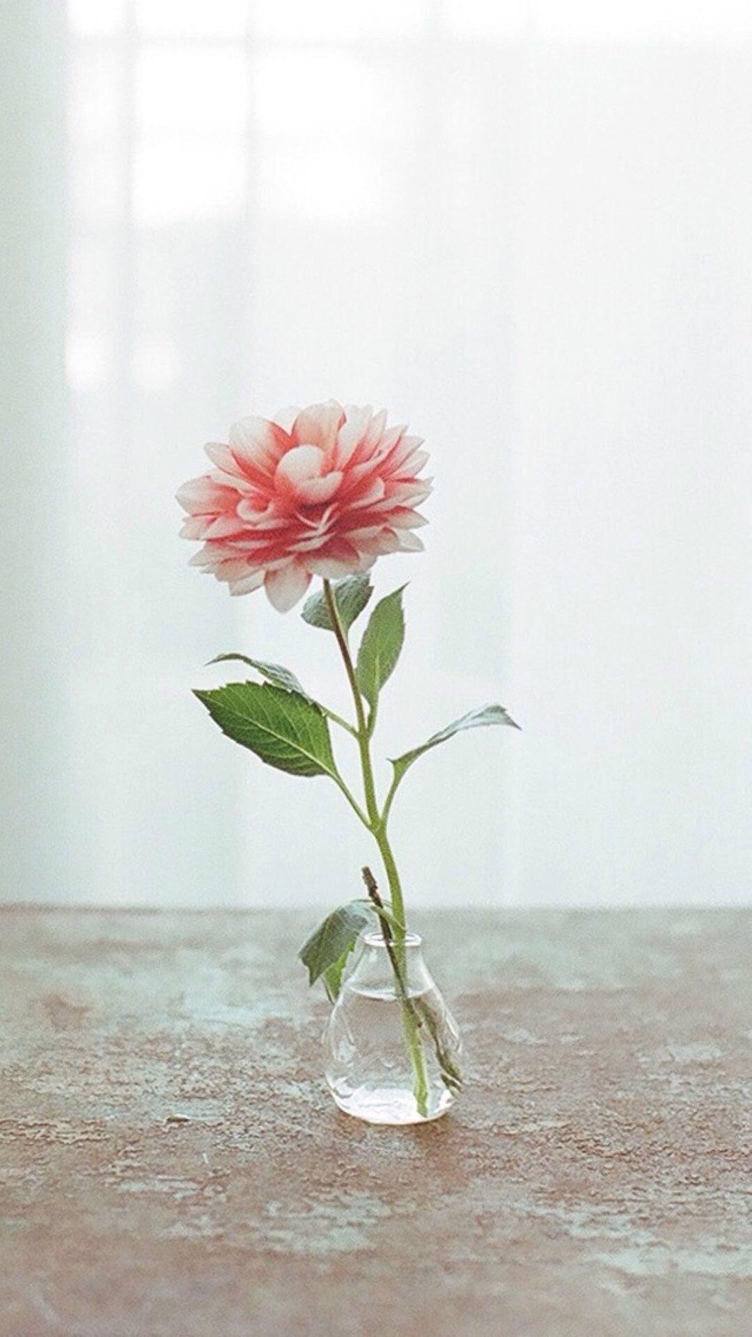 Res: 1080x1920, Natur pur eleganten Blumenvase drinnen Gardinen Dekorationen iPhone 8 Plus  Wallpaper