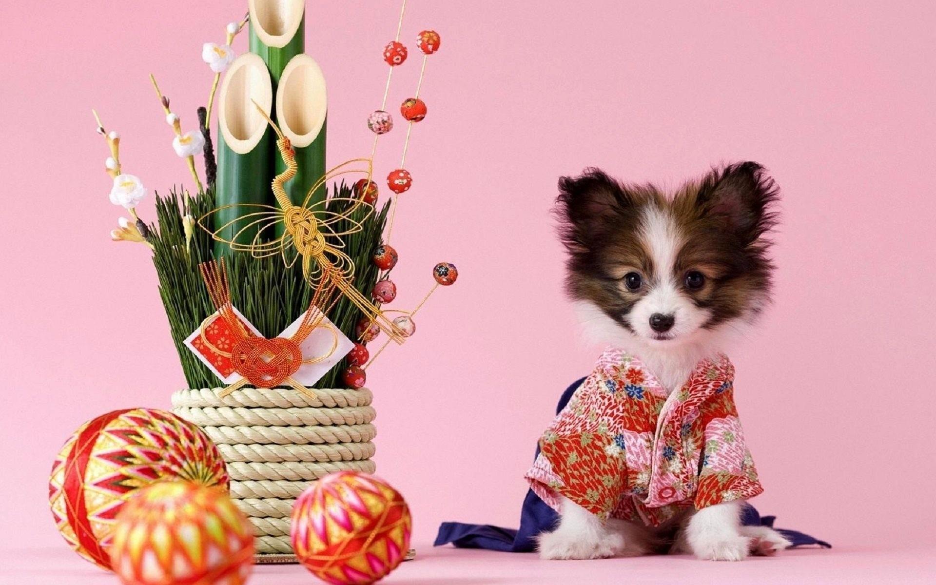 Res: 1920x1200, kimono, dog, ikebana, bamboo, sakura
