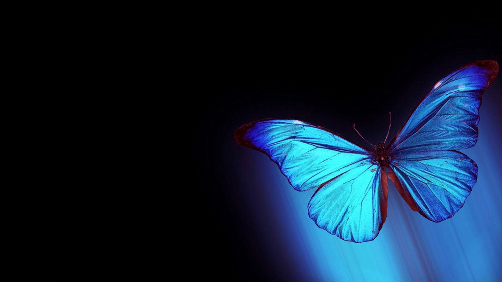Res: 1920x1080, abstract-butterfly-wallpapers