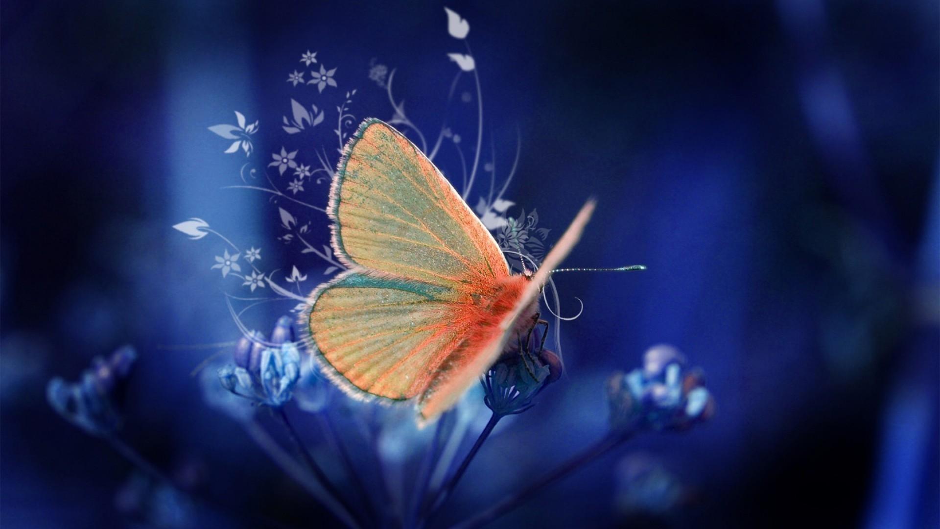 Res: 1920x1080, 1920x1200 3D+Butterfly | 3D Blue fractal Butterfly, 3D, Abstract, Black,  Blue