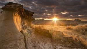 Country Western wallpapers