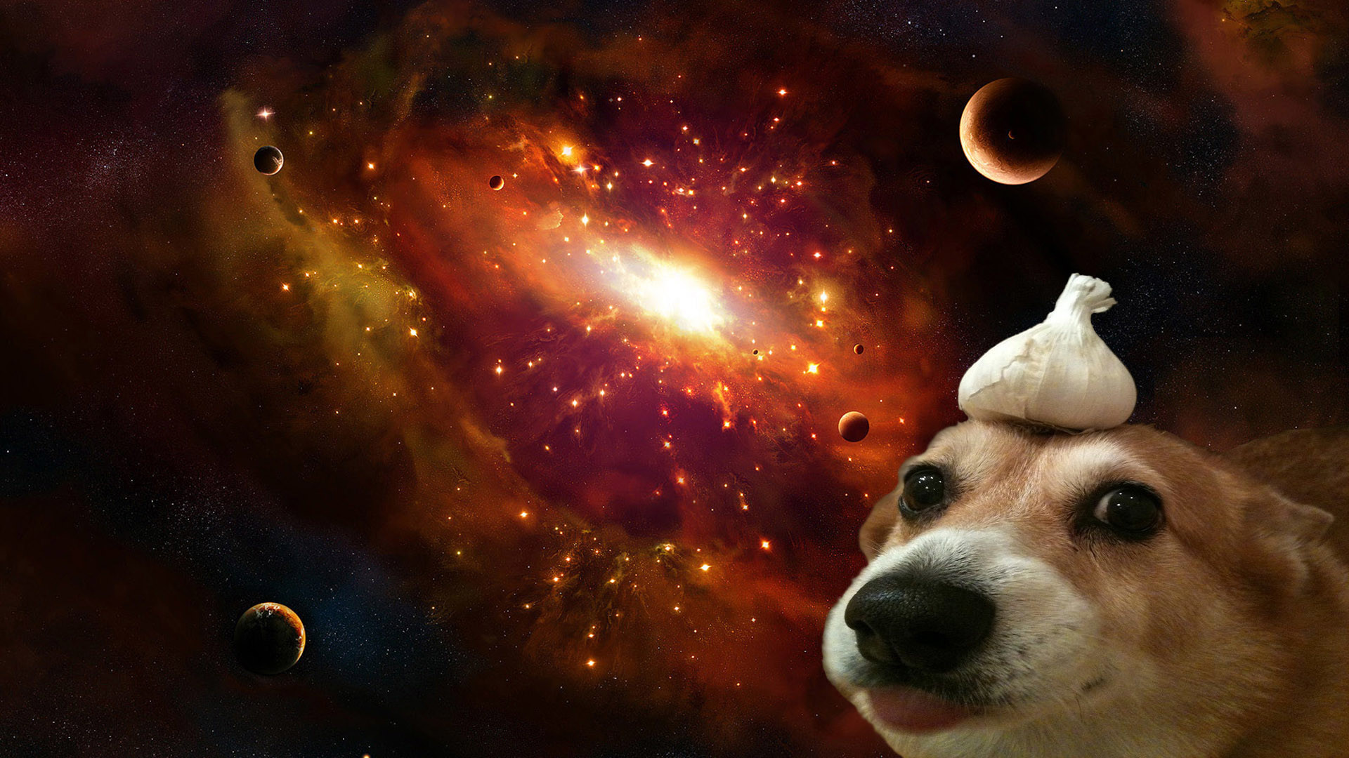 Res: 1920x1080, A dog with garlic on its' head in space [] ...