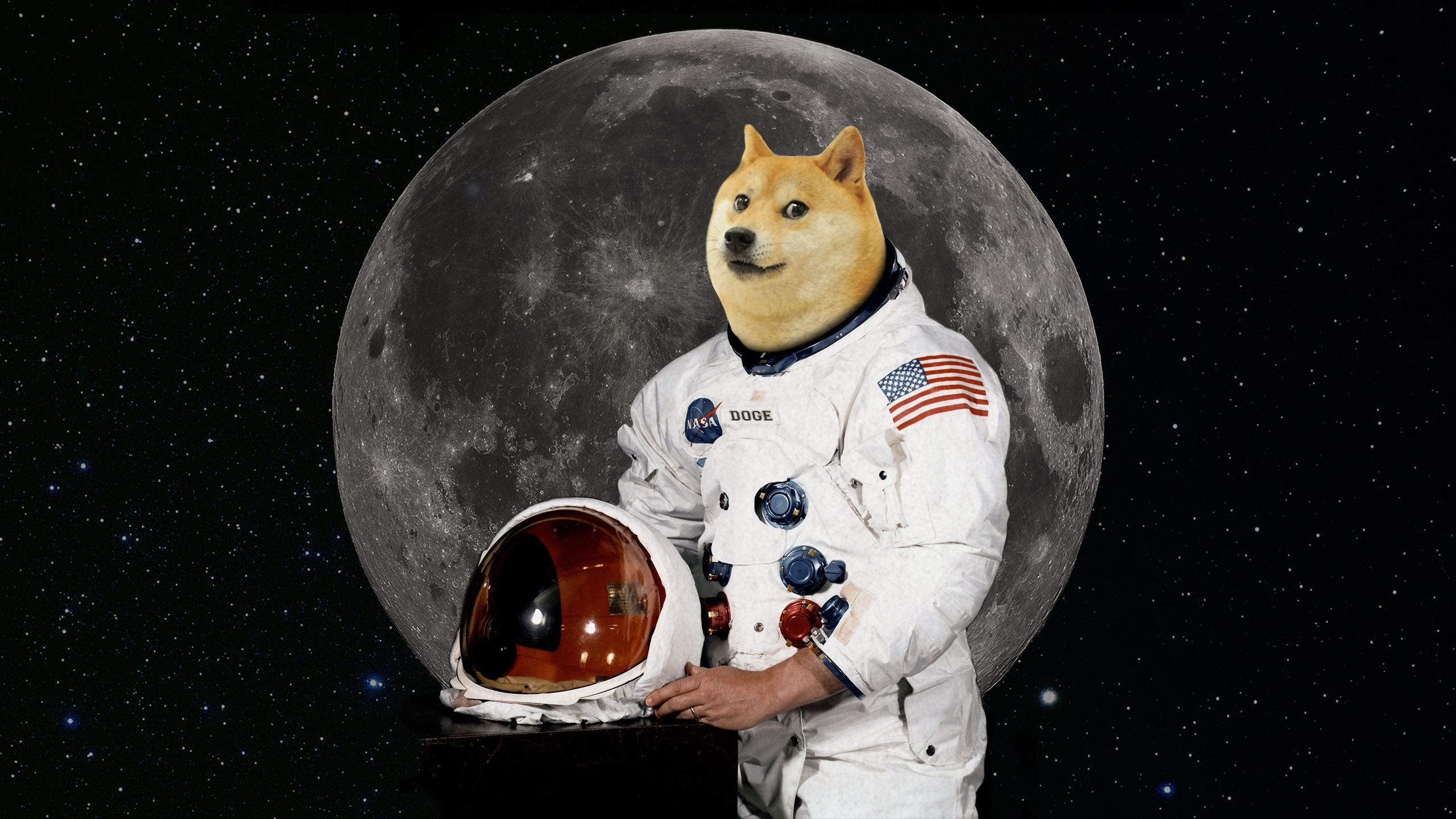 Res: 2560x1440, Shibe wallpapers