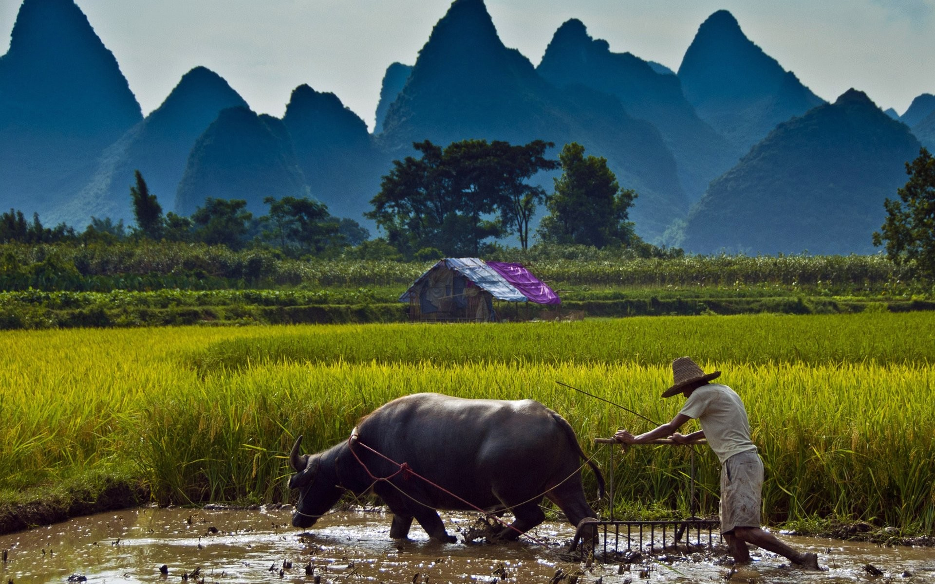 Res: 1920x1200, Wallpaper chinese farmer