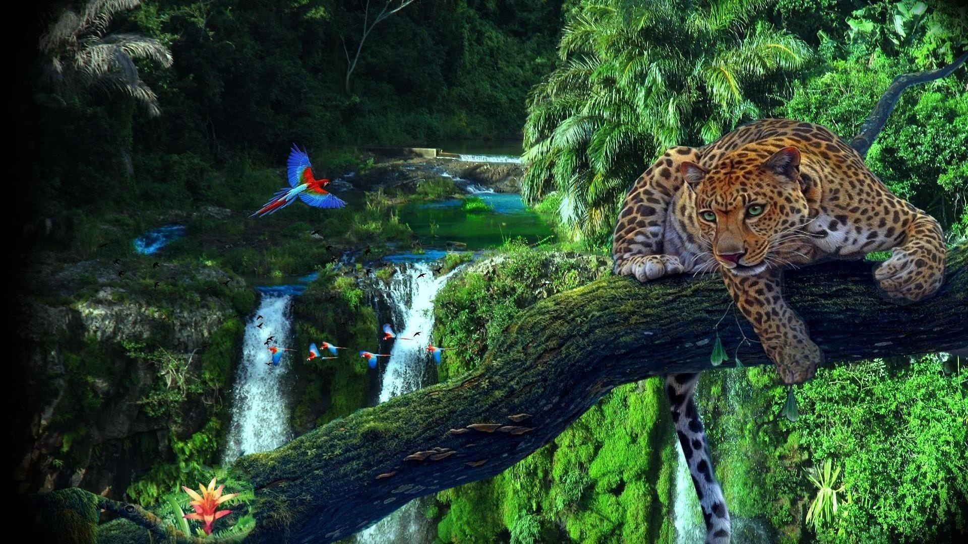 Res: 1920x1080, Amazon Rainforest Wallpaper Images #vIM