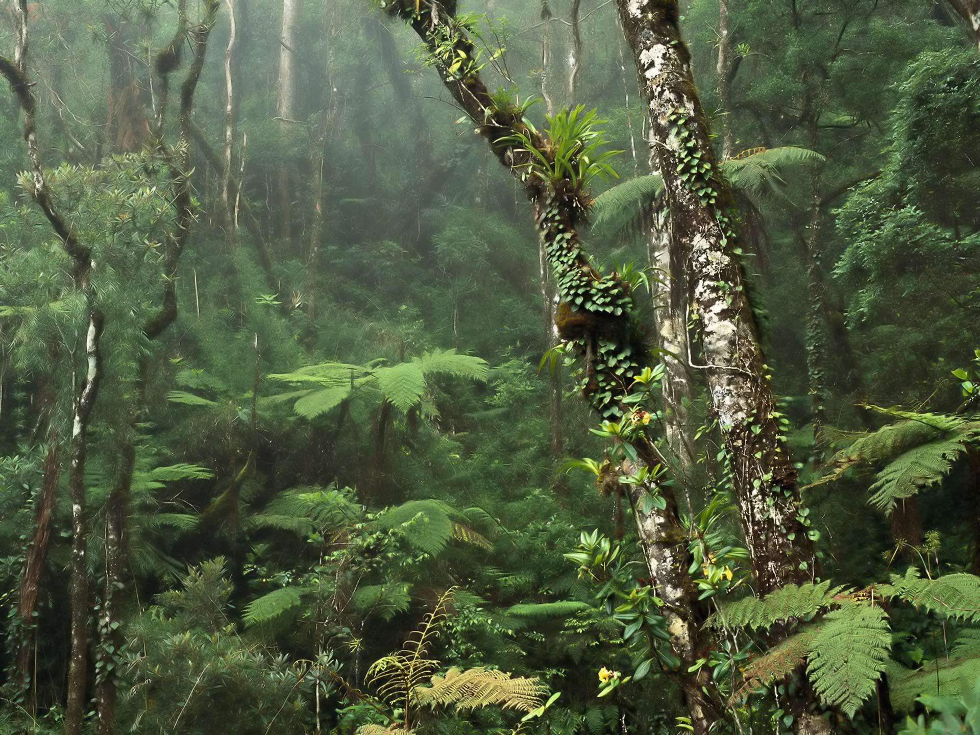 Res: 1920x1440, Damp misty rainforest wallpaper