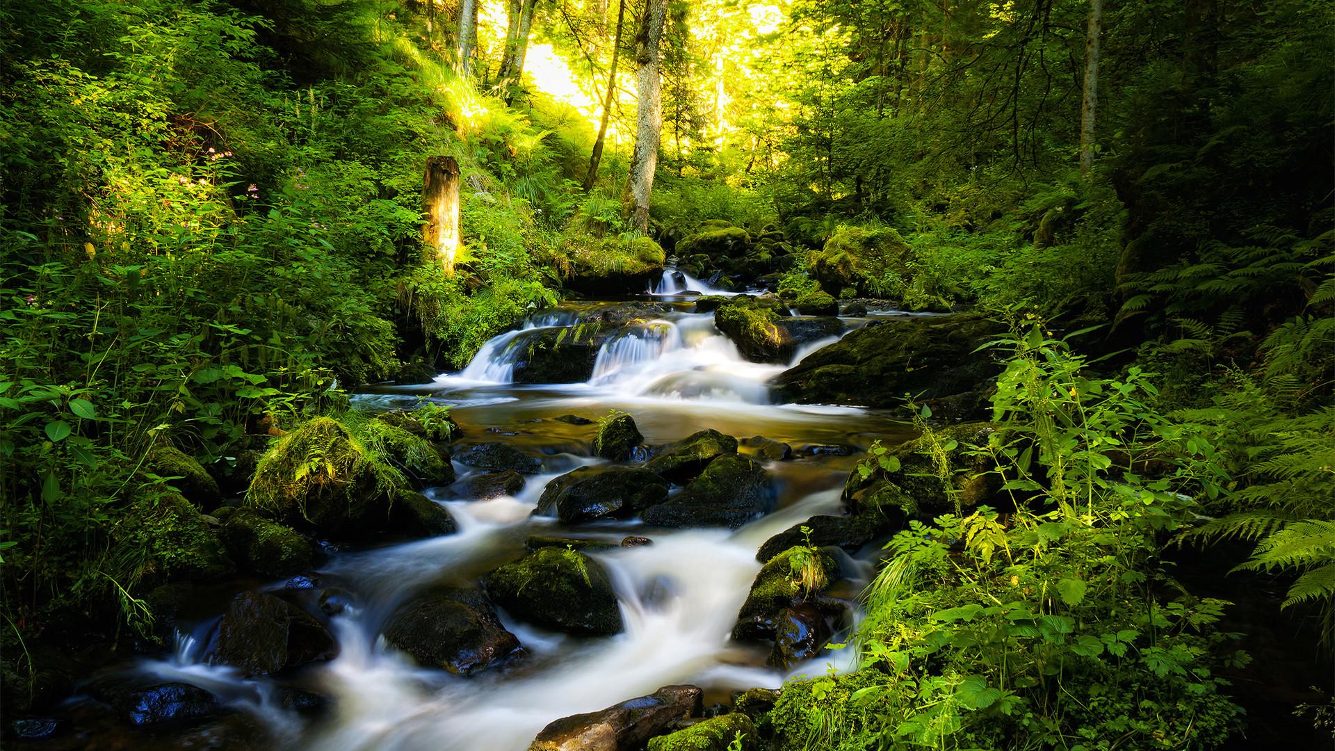Res: 1920x1080, Beautiful Rainforest Wallpaper 3374