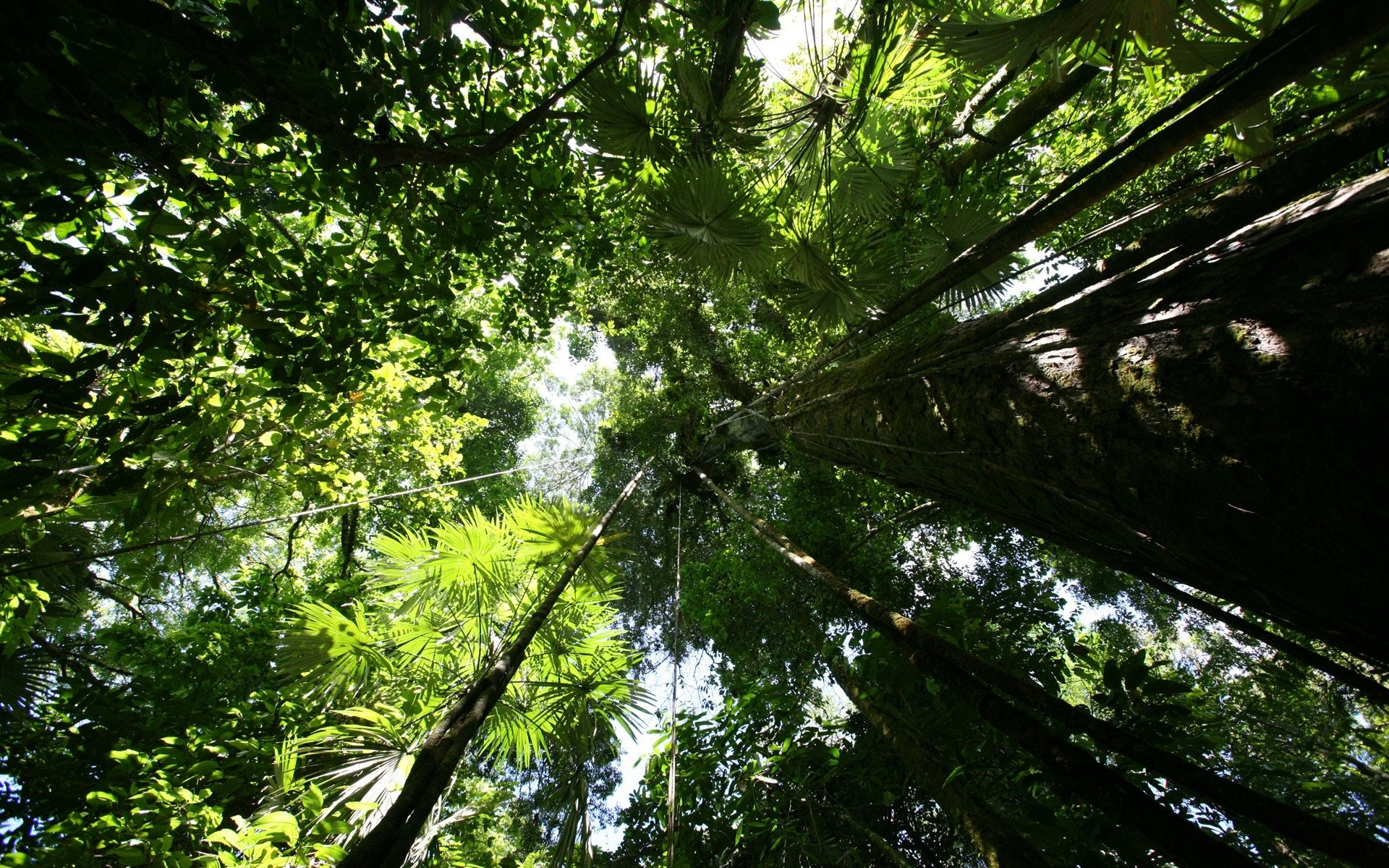 Res: 1920x1200, Rainforest Wallpaper - Rainforest