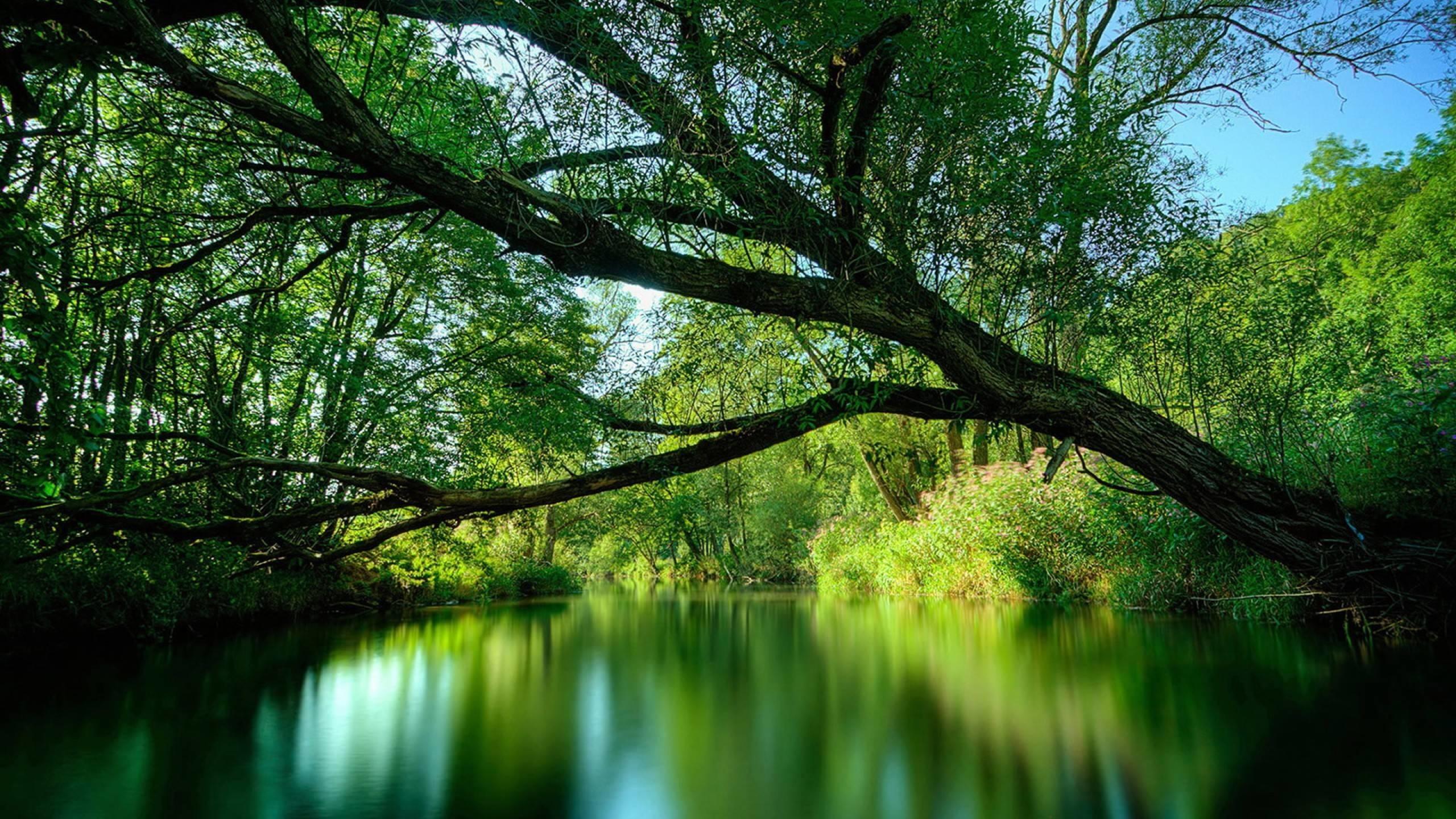 Res: 2560x1440, Rainforest Wallpaper Photo #MeX