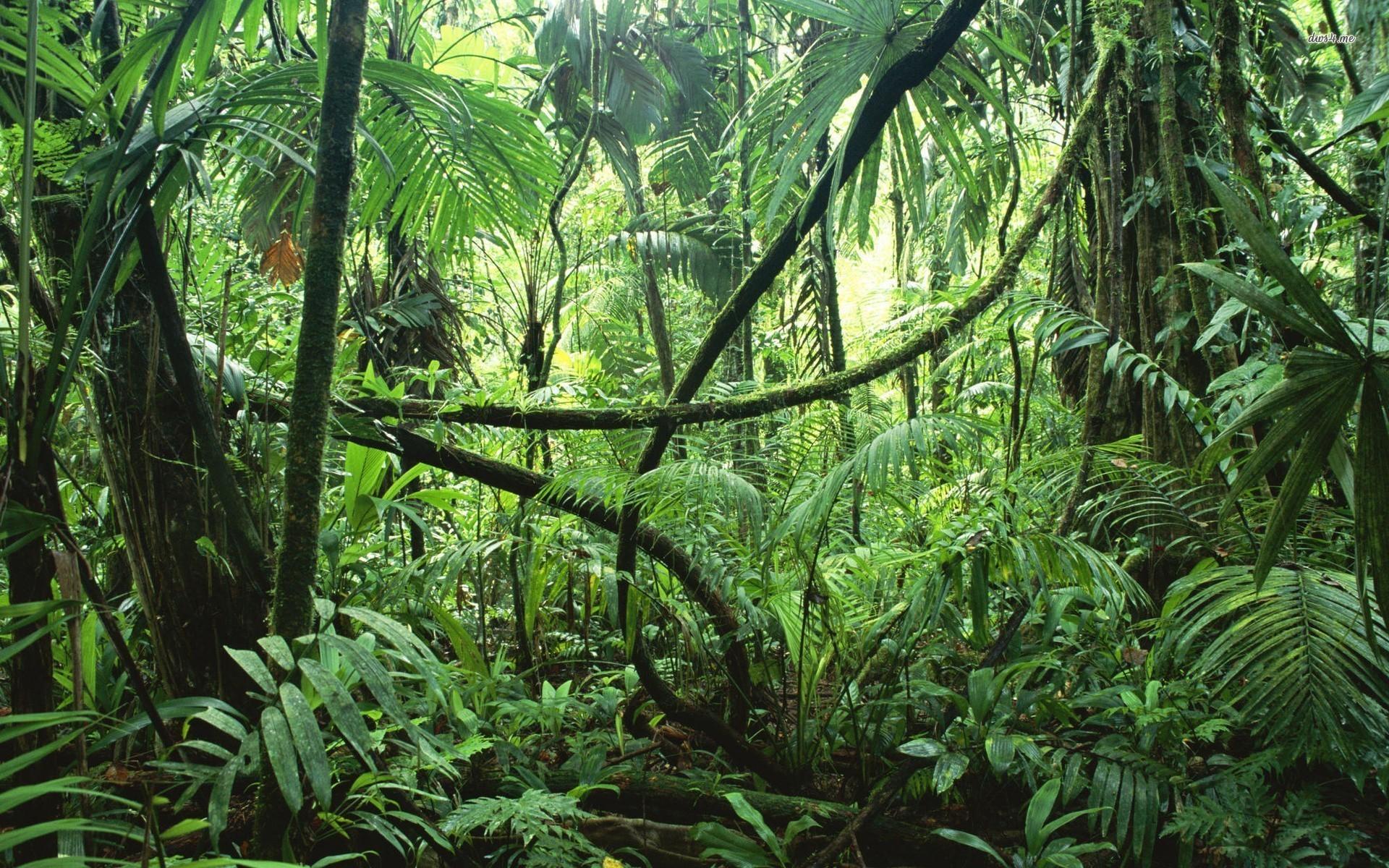 Res: 1920x1200, Jungle rainforest