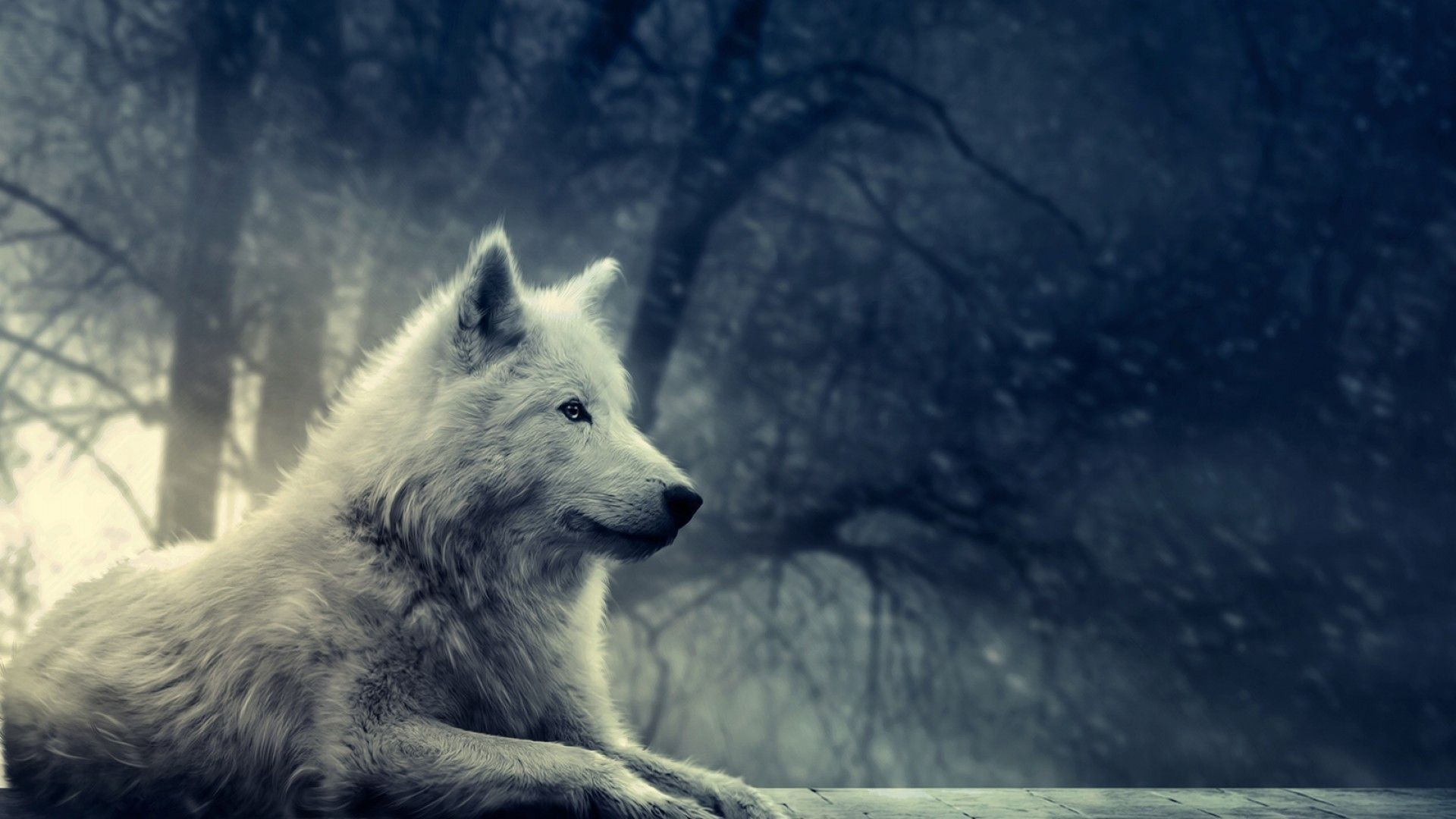 Res: 1920x1080, Downlaod wolf new hd wallpapers for desktop uamp; pc Animited PICS  1920×1200