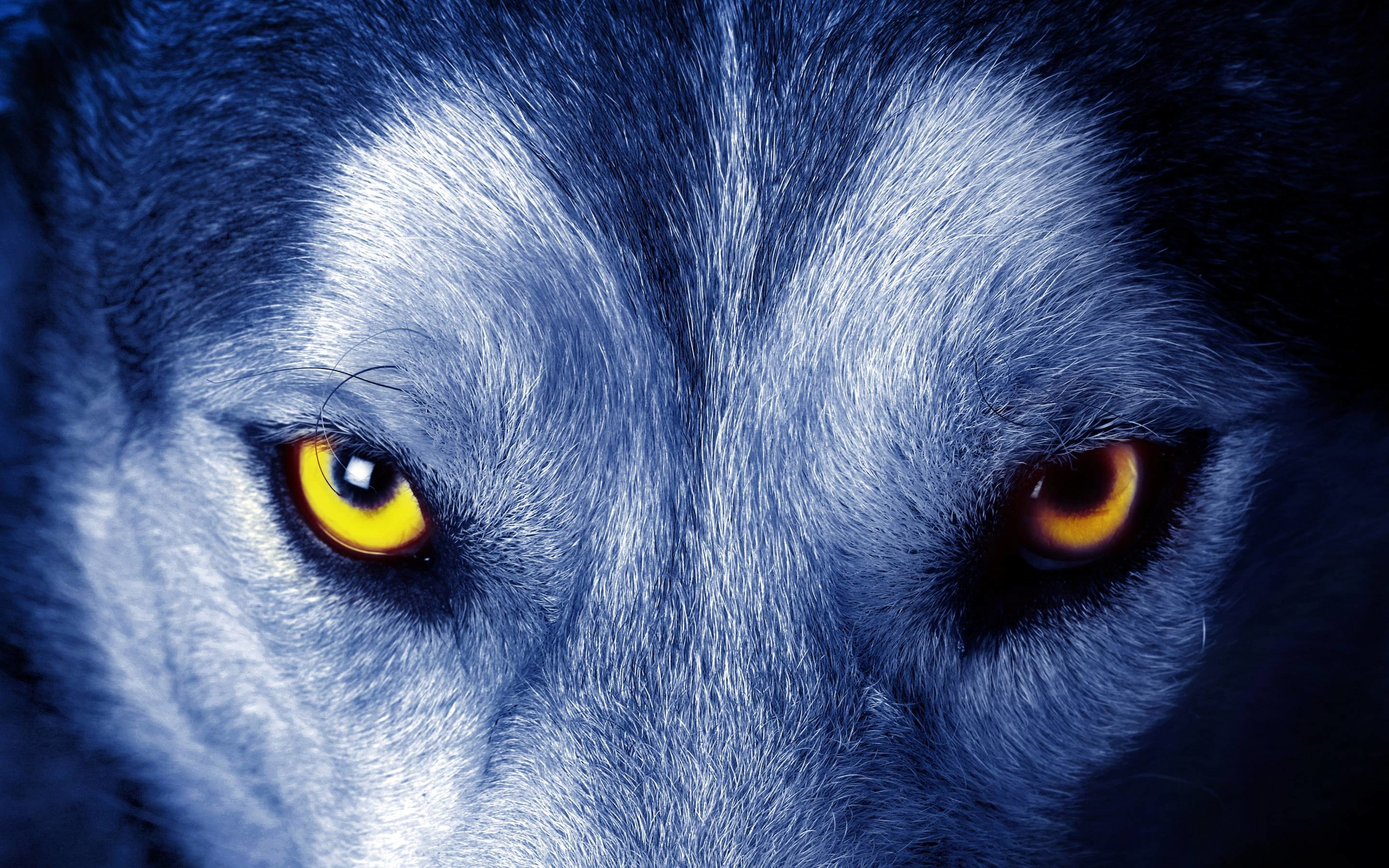 Res: 2880x1800, Wolf Eyes Wallpaper | Free HD Desktop Backgrounds