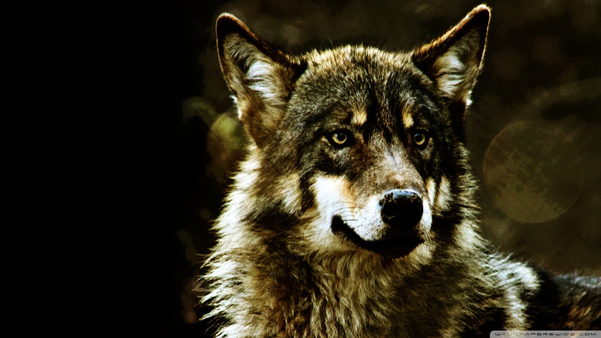 Res: 1920x1080, 839 Wolf HD Wallpapers Backgrounds Wallpaper Abyss - HD Wallpapers