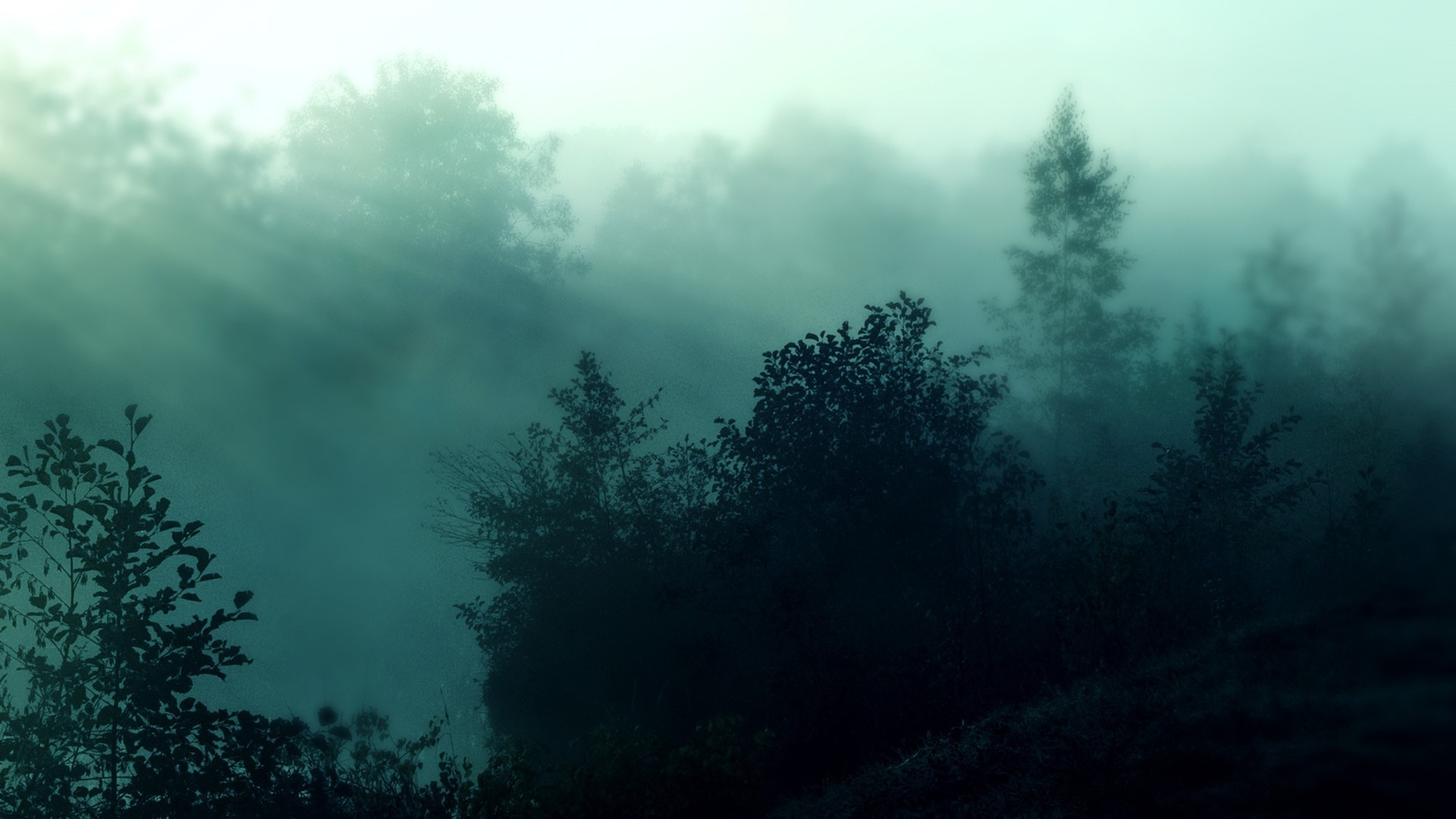 Res: 1920x1080, Foggy forest nature hd wallpapers.