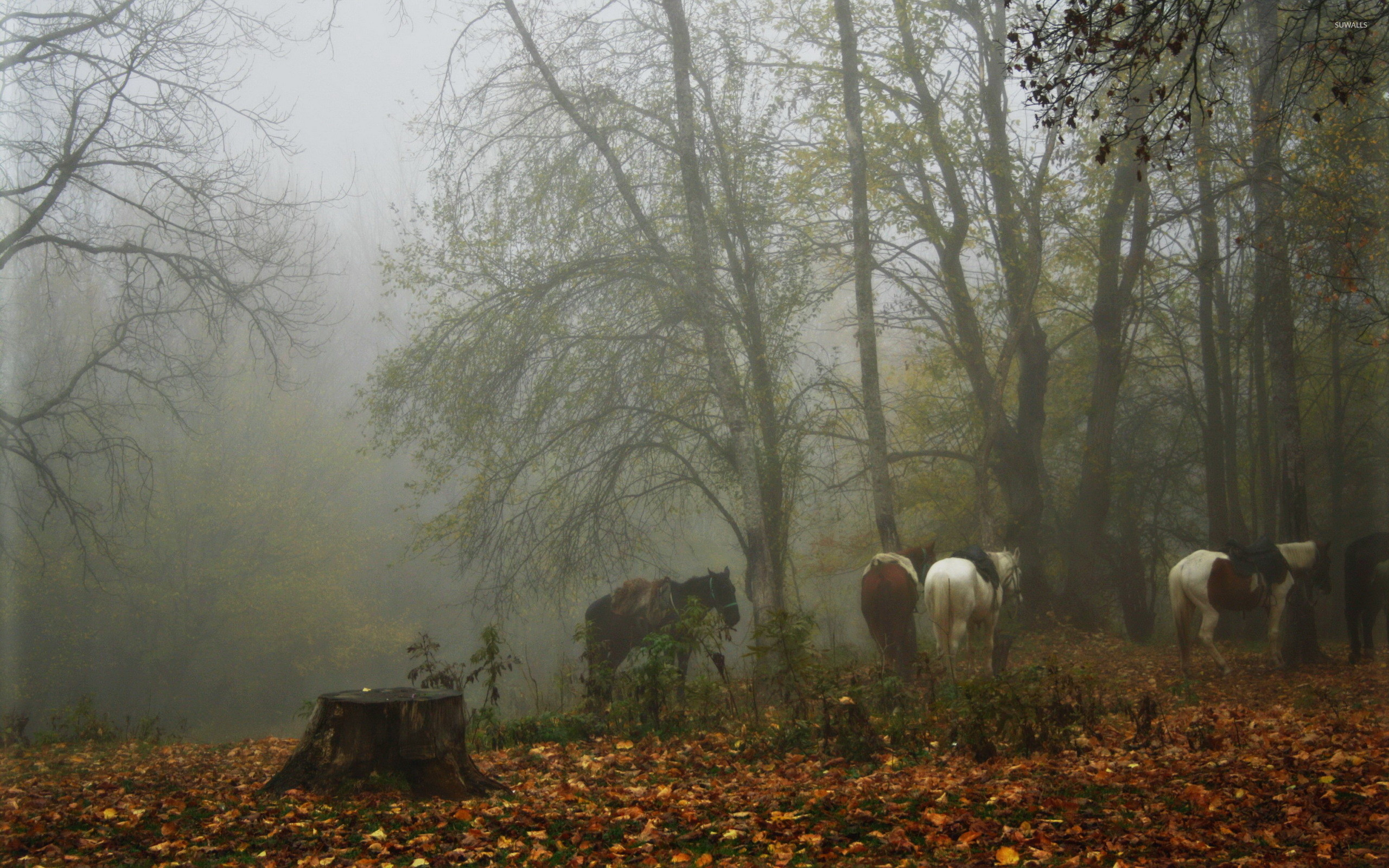 Res: 2560x1600, Horses in a foggy forest wallpaper