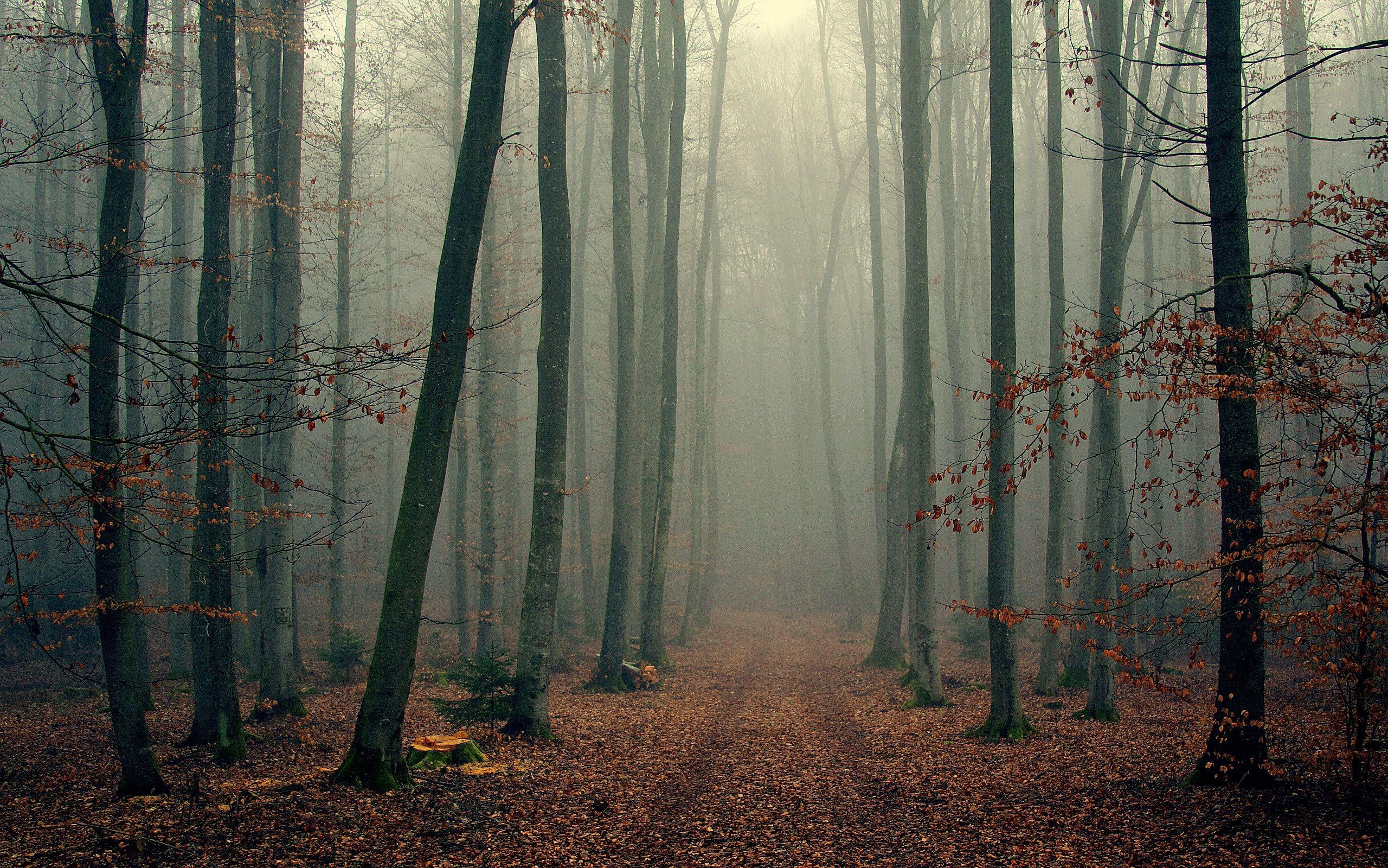 Res: 2560x1600, Fog Forest Autumn Fog forest autumn foggy trees