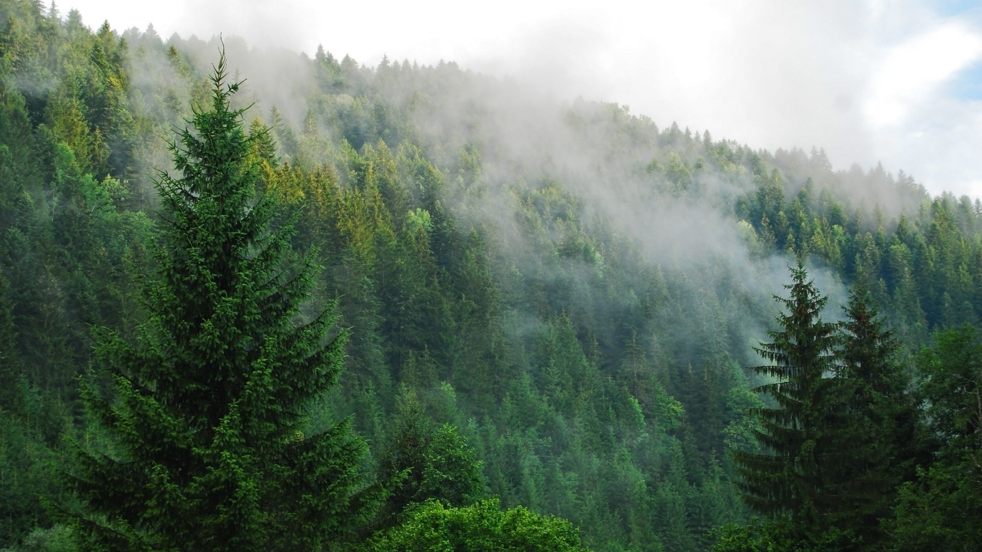 Res: 1920x1080, Foggy Forest Full HD Images Free Download