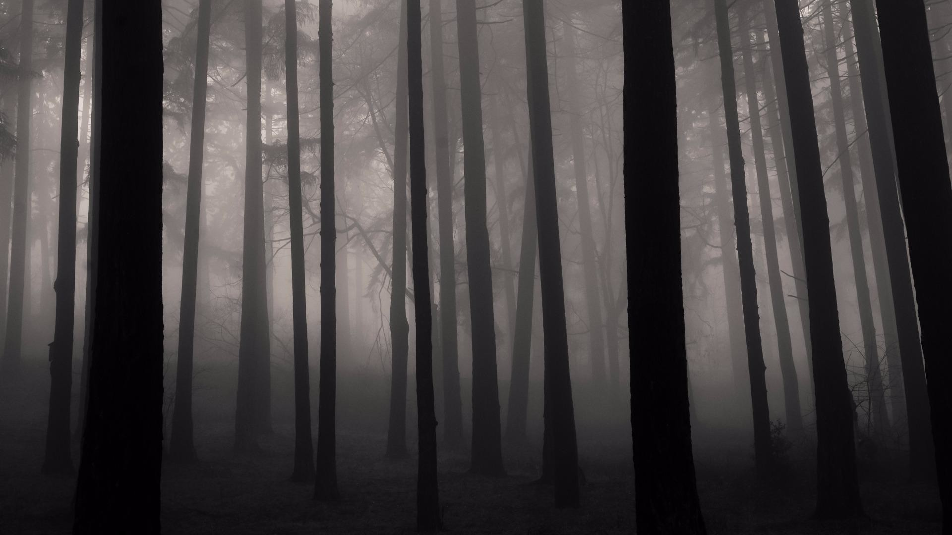 Res: 1920x1080, Foggy Mystic Forest Wallpaper | Wallpaper Studio 10 | Tens of thousands HD  and UltraHD wallpapers for Android, Windows and Xbox