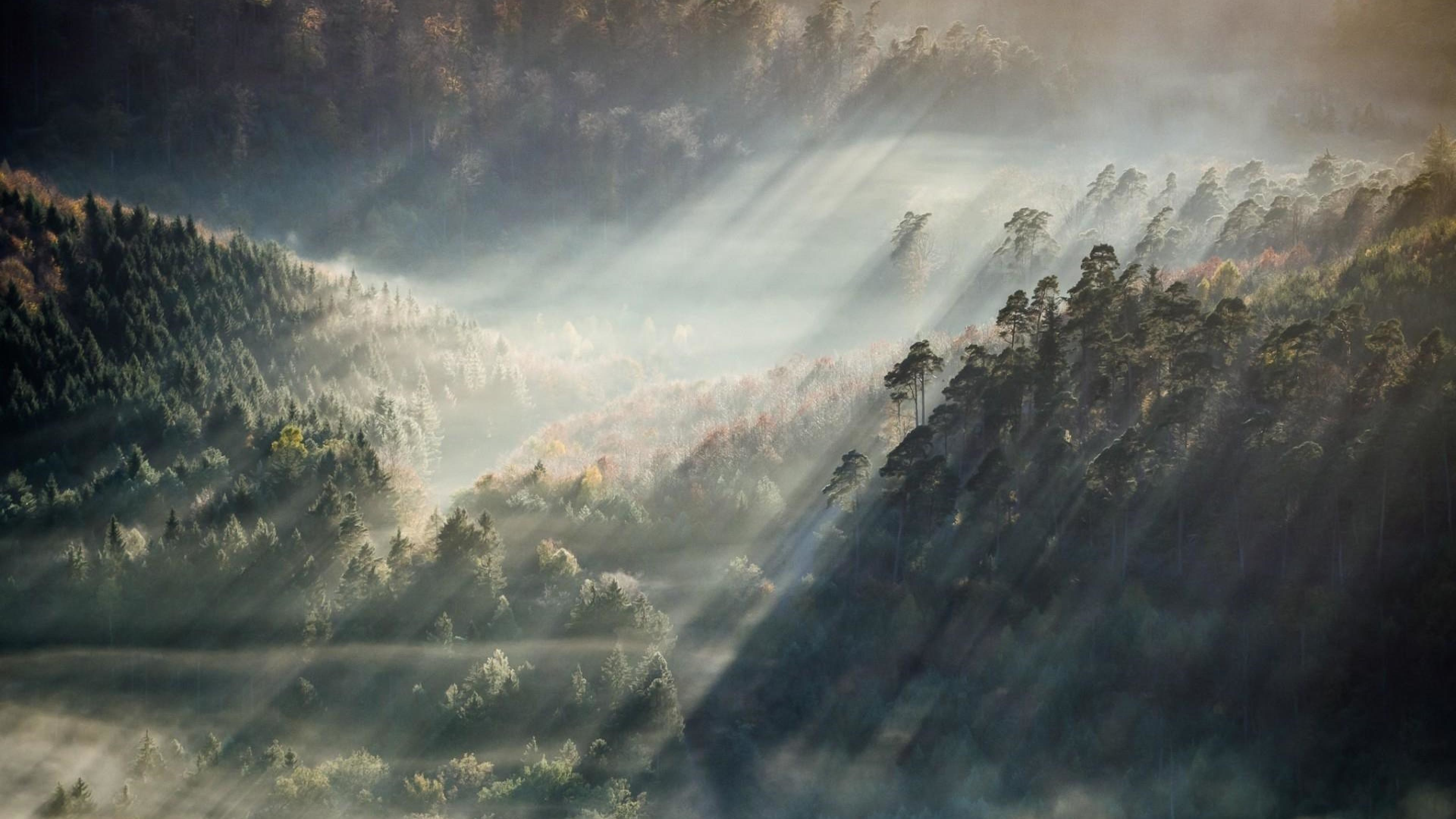 Res: 3840x2160, Foggy Forest Wallpaper Photo
