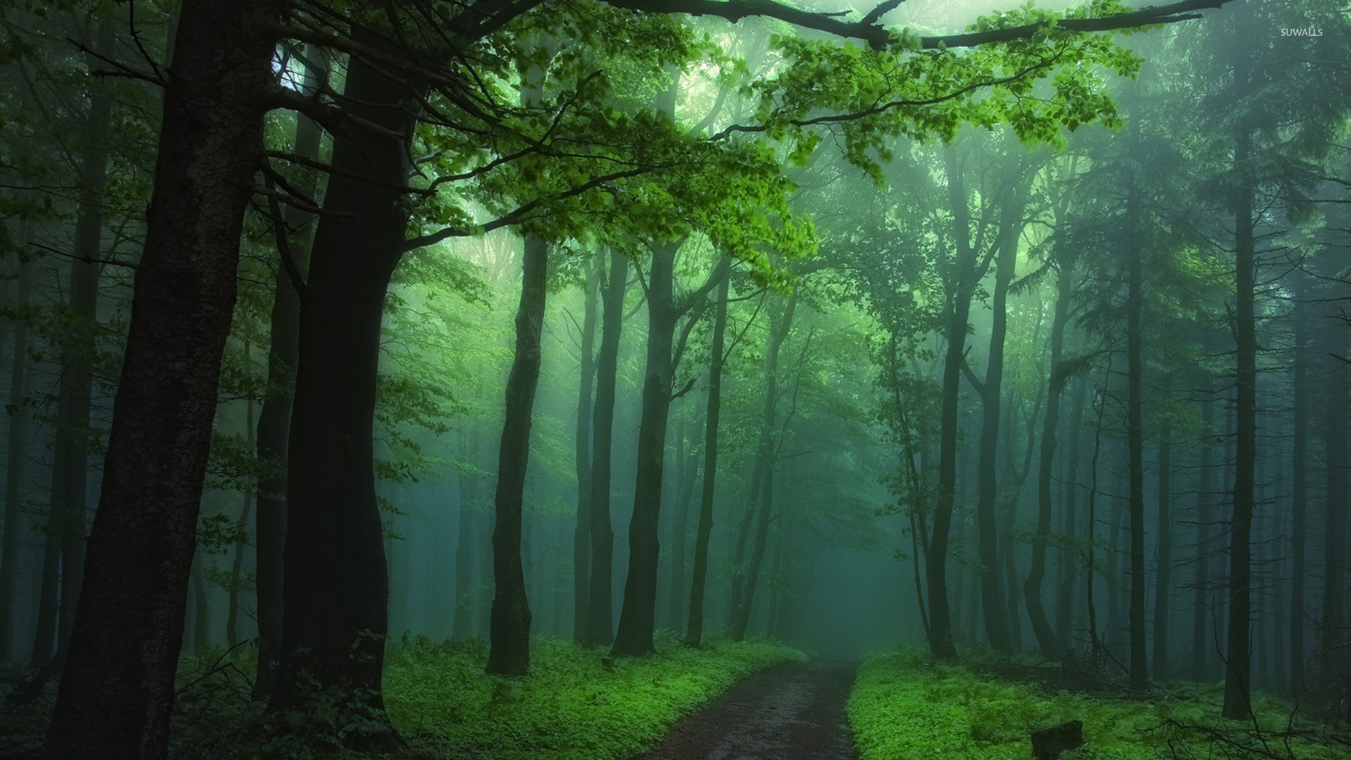 Res: 1920x1080, Green foggy forest wallpaper