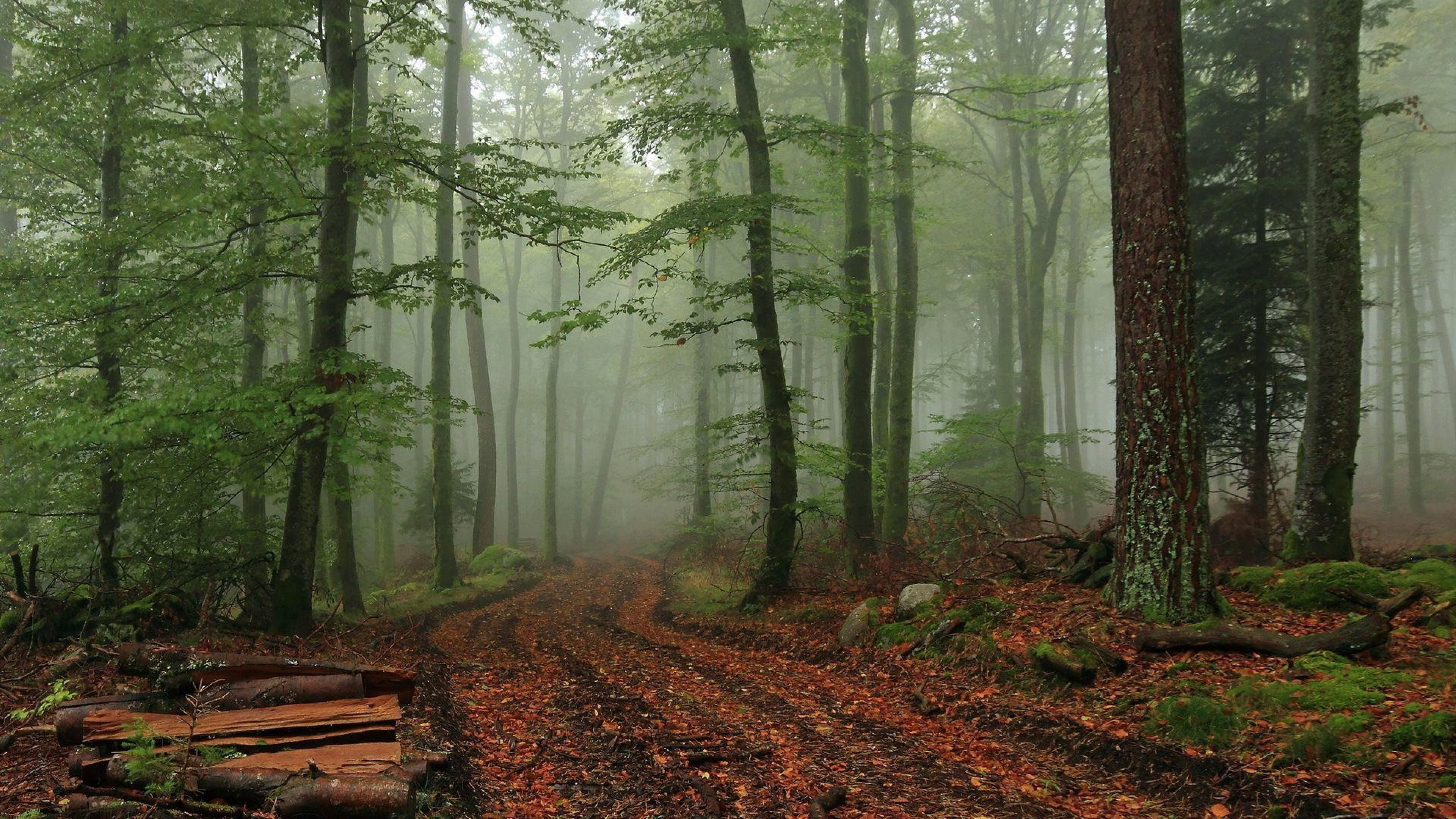 Res: 3840x2160, Foggy Forest Wallpaper Wide #5Fv