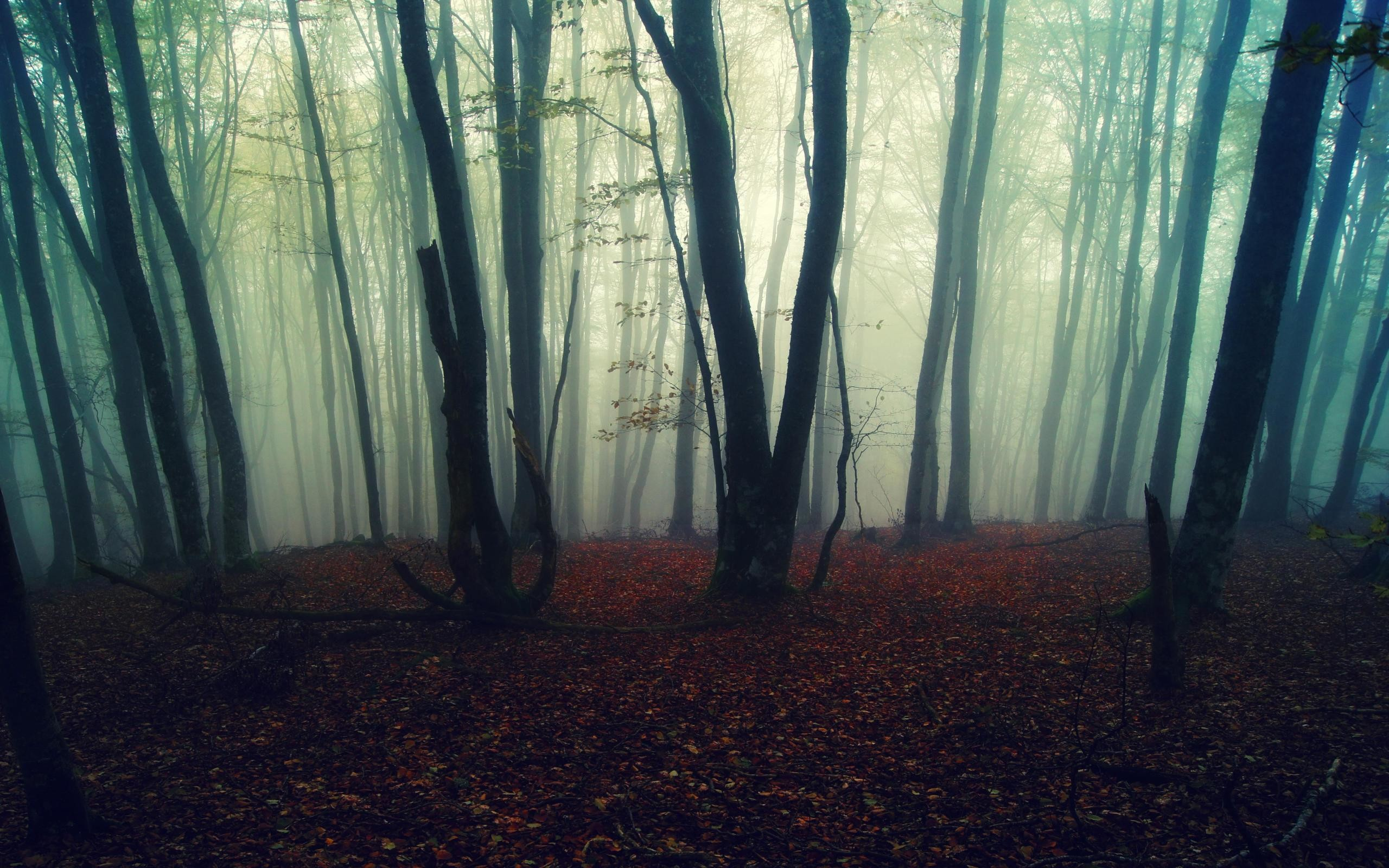 Res: 2560x1600, Beautiful Foggy Forest Photos