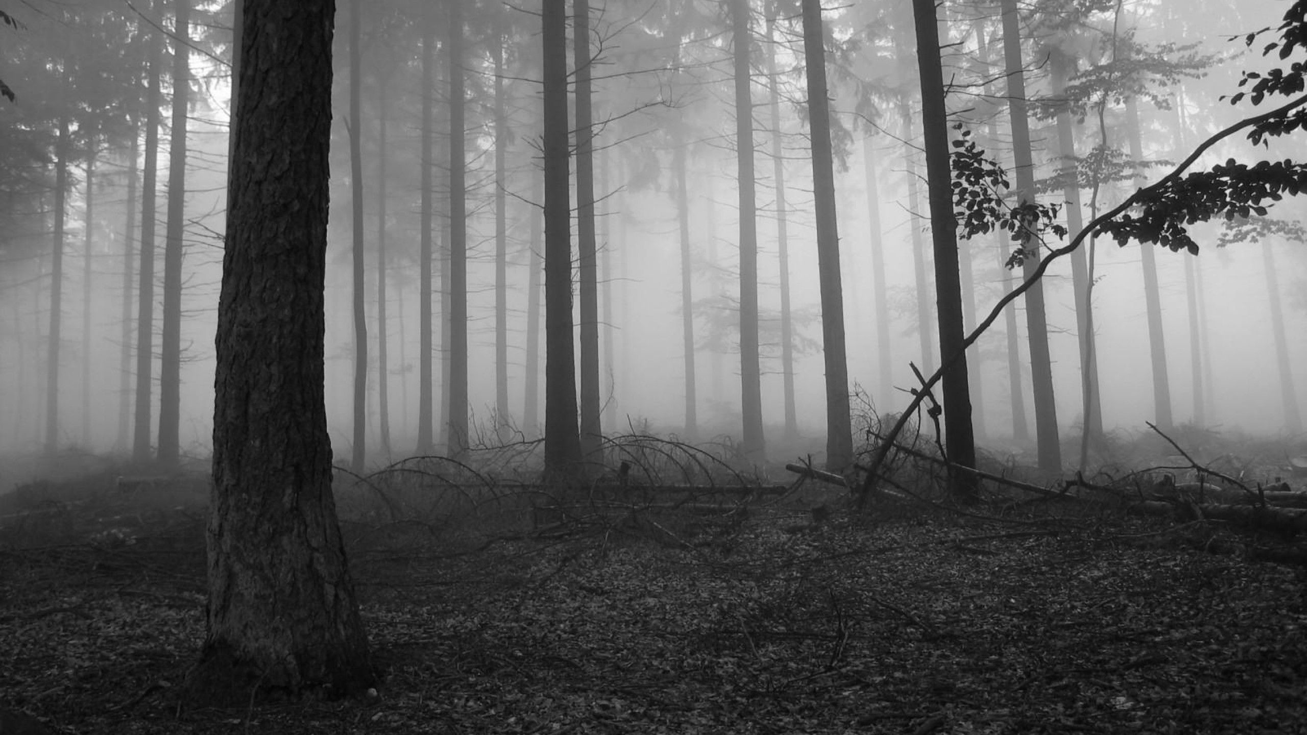 Res: 2560x1440, Fog in the dark forest Nature HD desktop wallpaper, Tree wallpaper, Forest  wallpaper, Fog wallpaper, Branch wallpaper - Nature no.