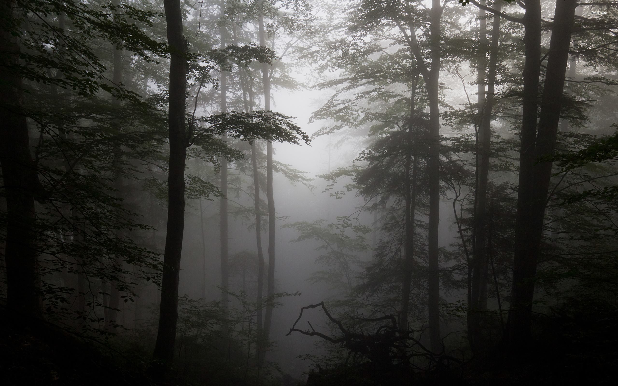Res: 2560x1600, ... Foggy forest wallpaper  ...