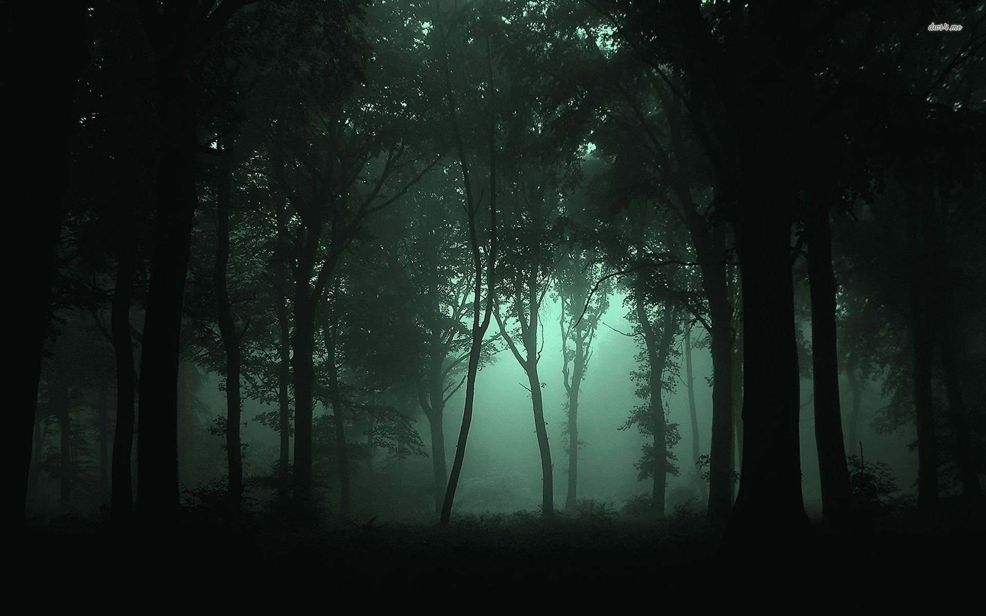 Res: 1920x1200, dark foggy forest