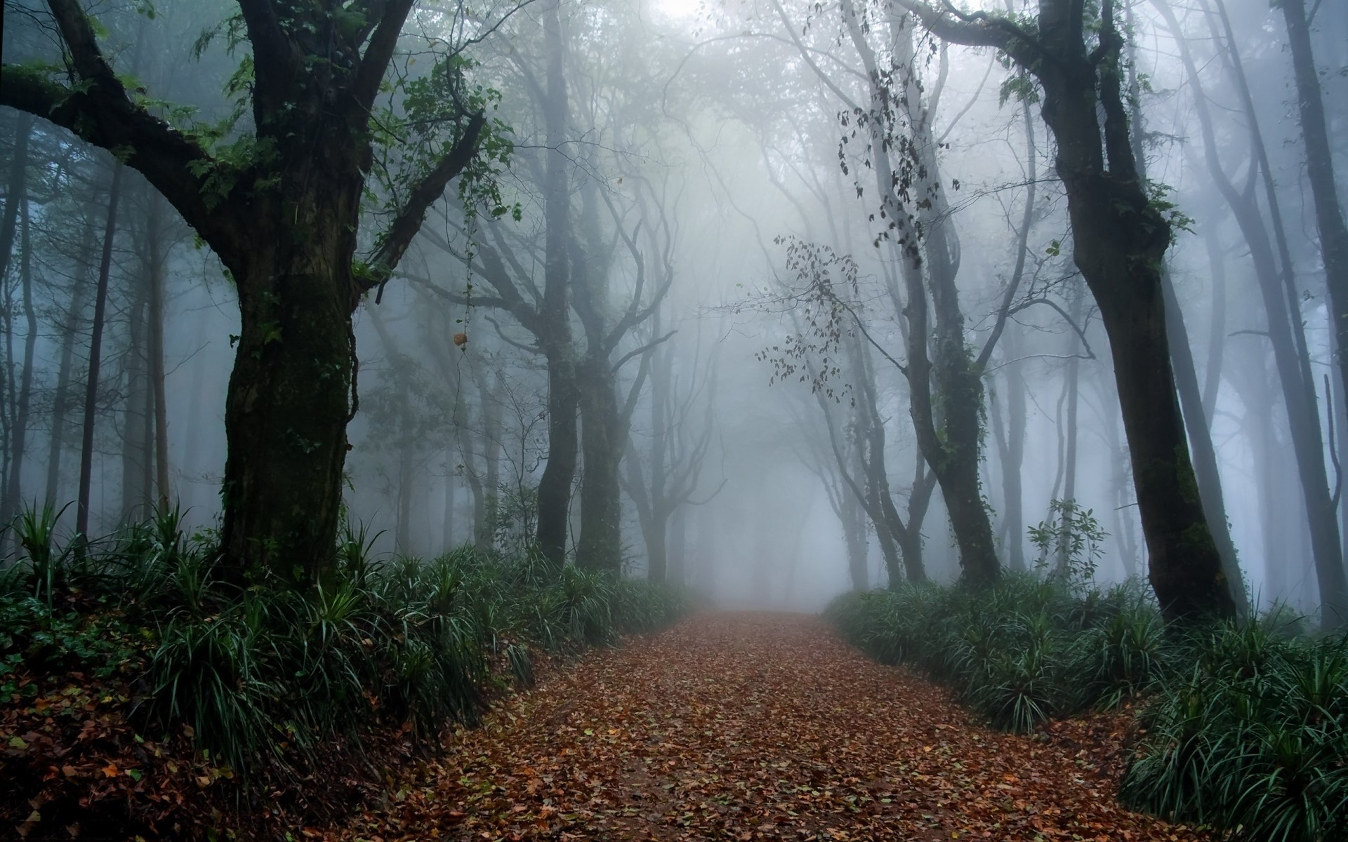 Res: 1920x1200, Bild: Foggy Forest Way Laub Gras wallpapers and stock photos. Â«