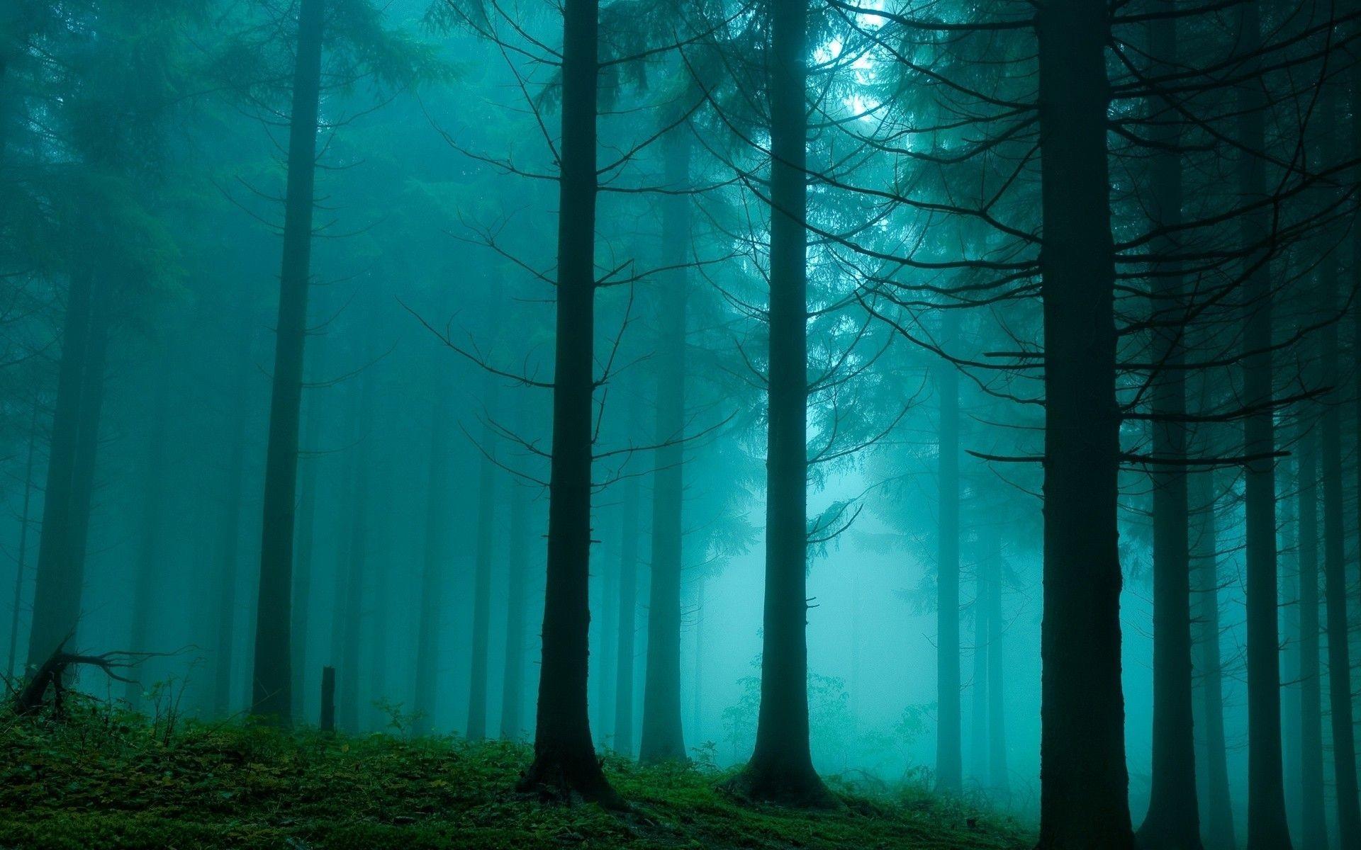Res: 1920x1200, Fog Wallpaper