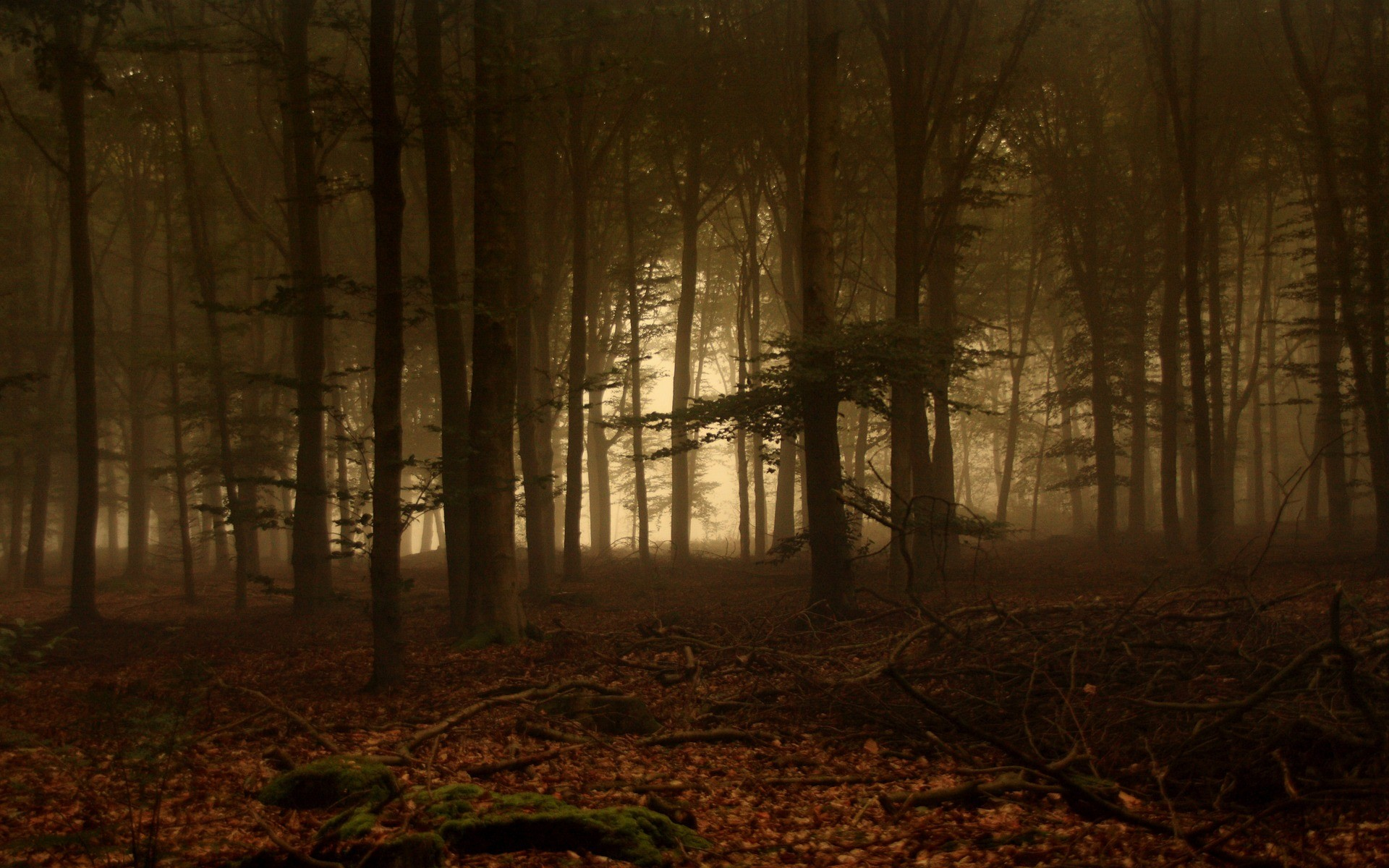 Res: 1920x1200, Forest Of Fog Wallpaper Landscape Nature Wallpapers