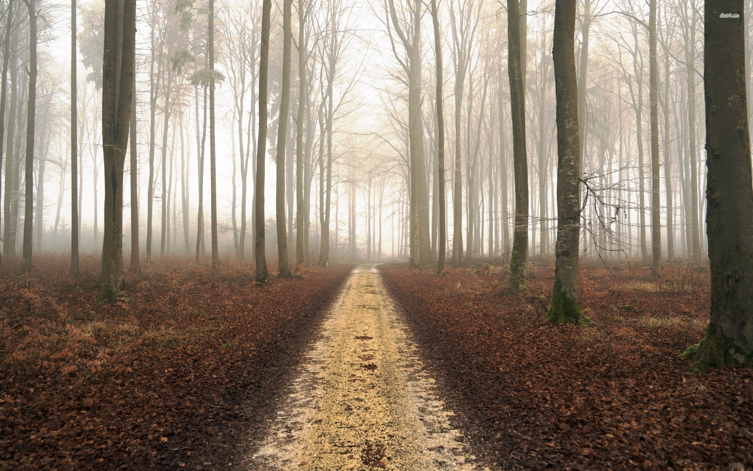 Res: 2560x1600, ... Path in the foggy forest wallpaper  ...