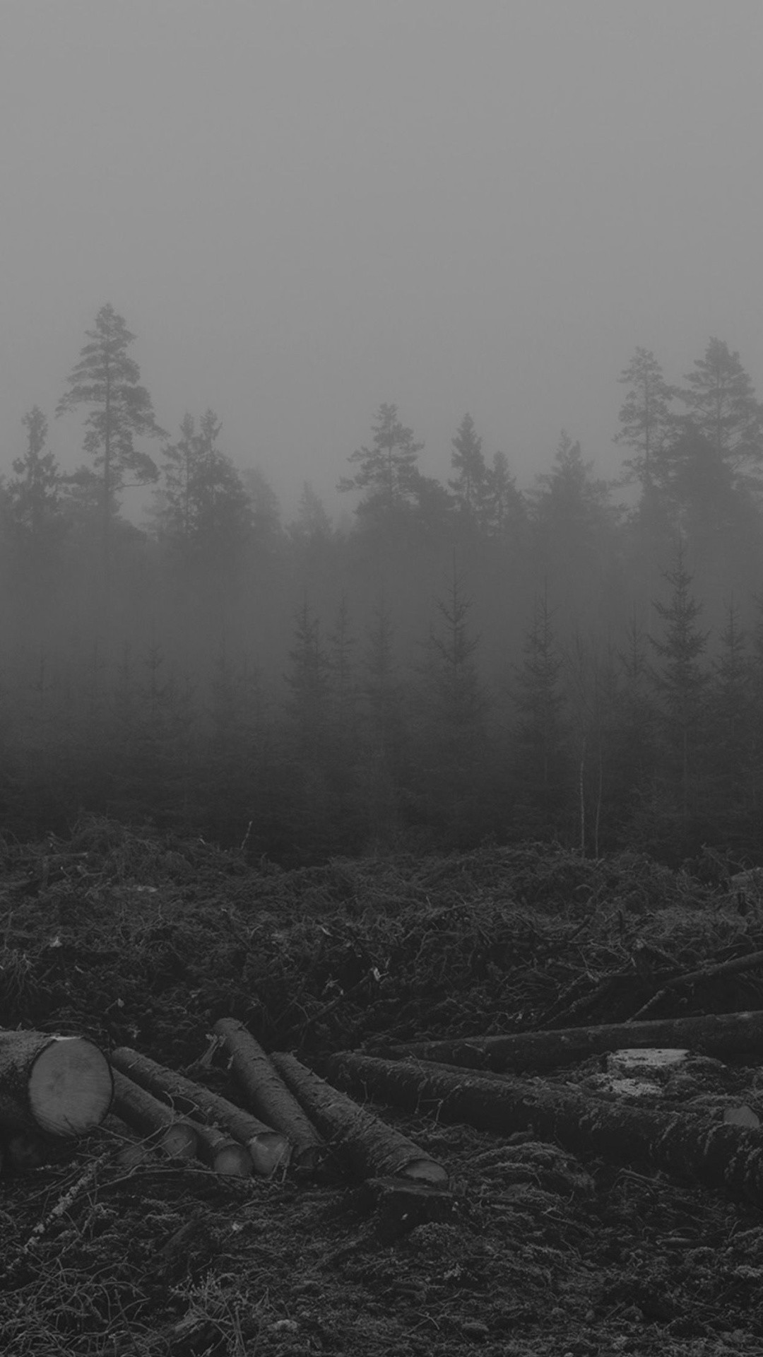 Res: 1080x1920, Foggy Forest Trees Cut Down iPhone 6 Plus HD Wallpaper ...