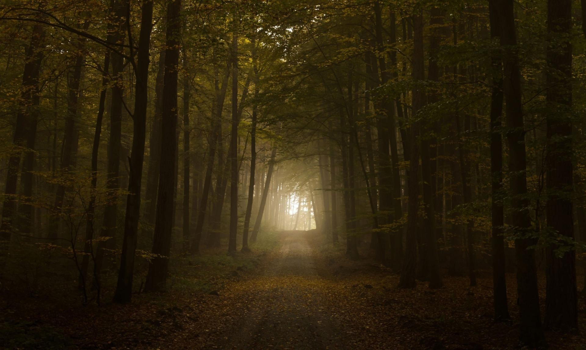 Res: 1920x1147, Path through the foggy forest HD wallpapers
