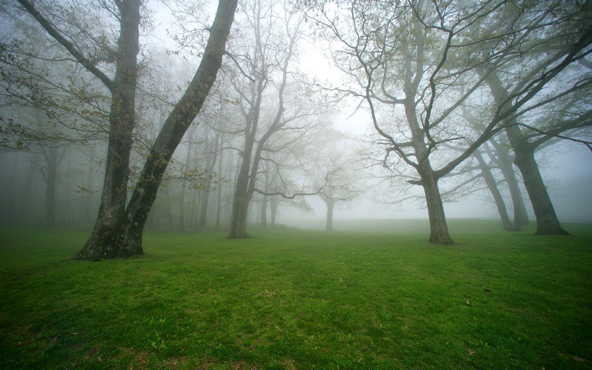 Res: 1920x1200, Nature Green Foggy Forest | 1920 x 1200 | Download | Close