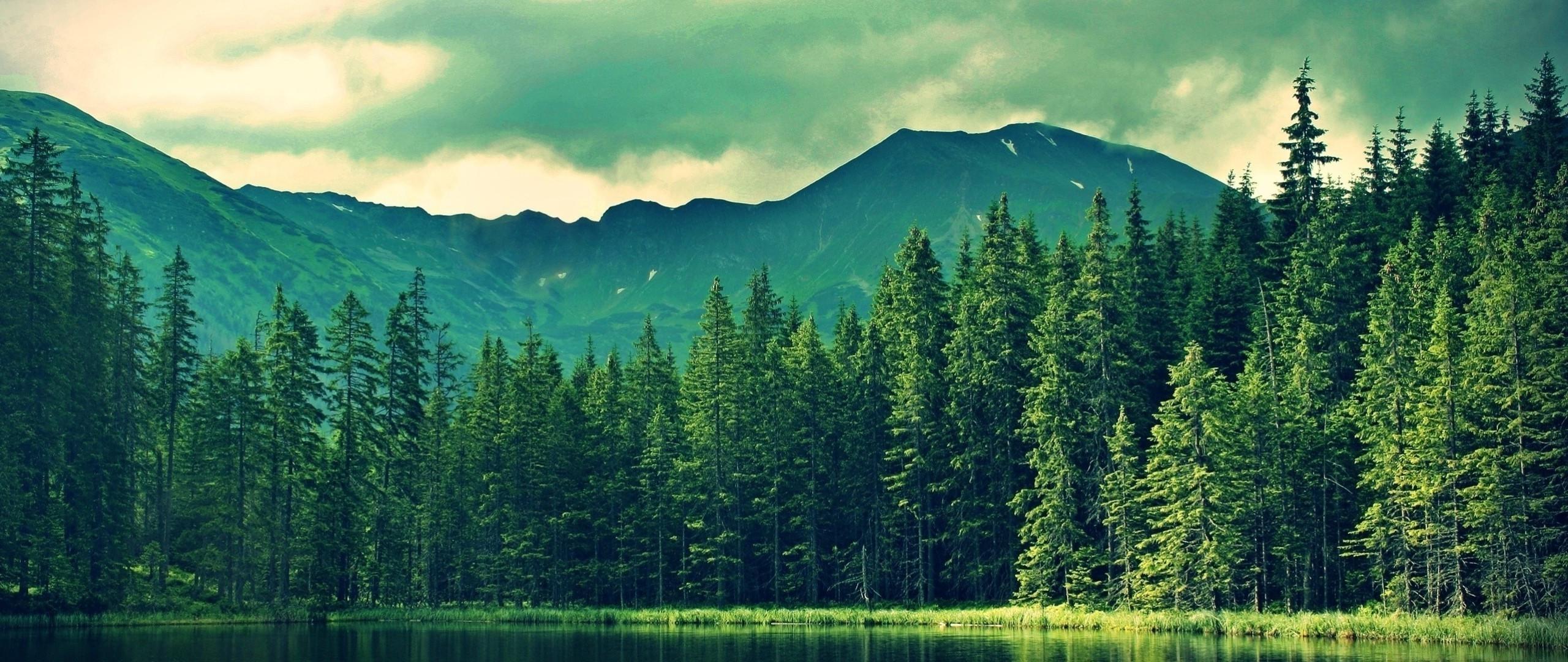 Res: 2560x1080,  Hintergrundbilder : Landschaft, Wald, See, Natur, Betrachtung,  Grün, Morgen