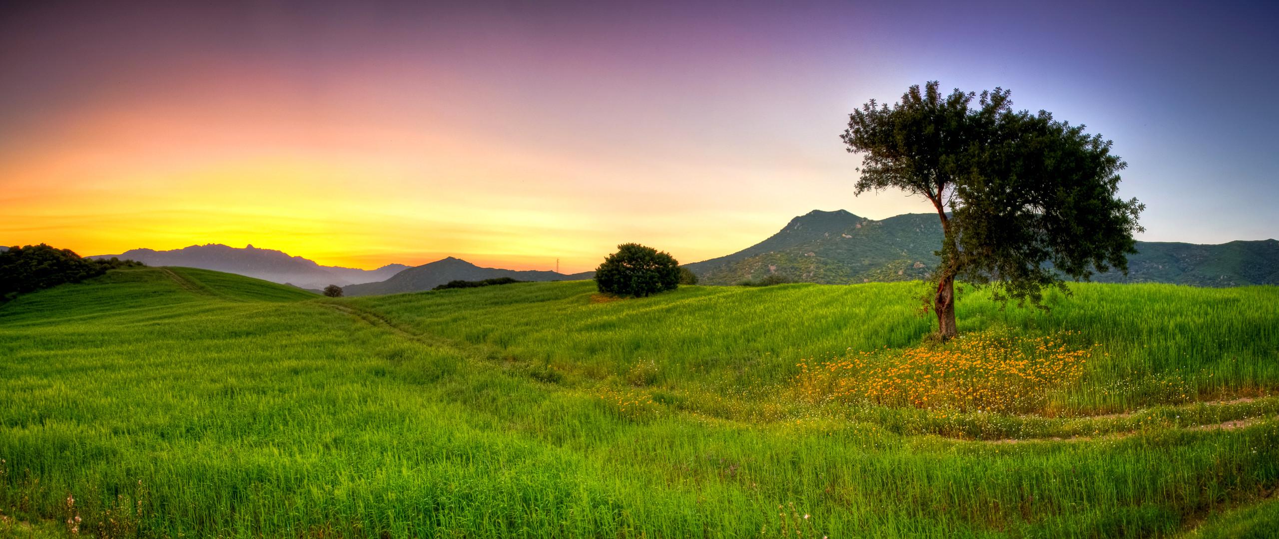 Res: 2560x1080, Erde/Natur - Landschaft Baum Wallpaper