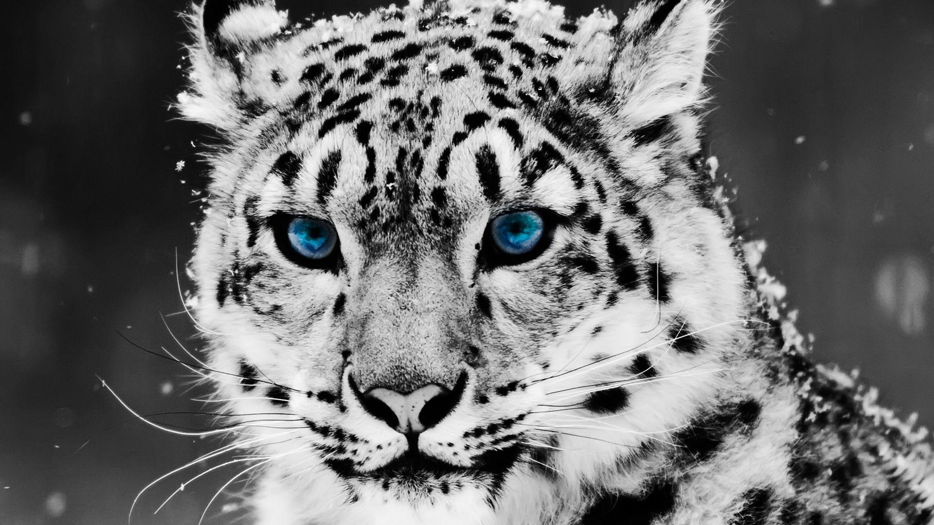 Res: 1920x1080, Tiere-Tiger-Baby Animals-HD-Tisch-und-Mobile-wallpaper-wpt8002000