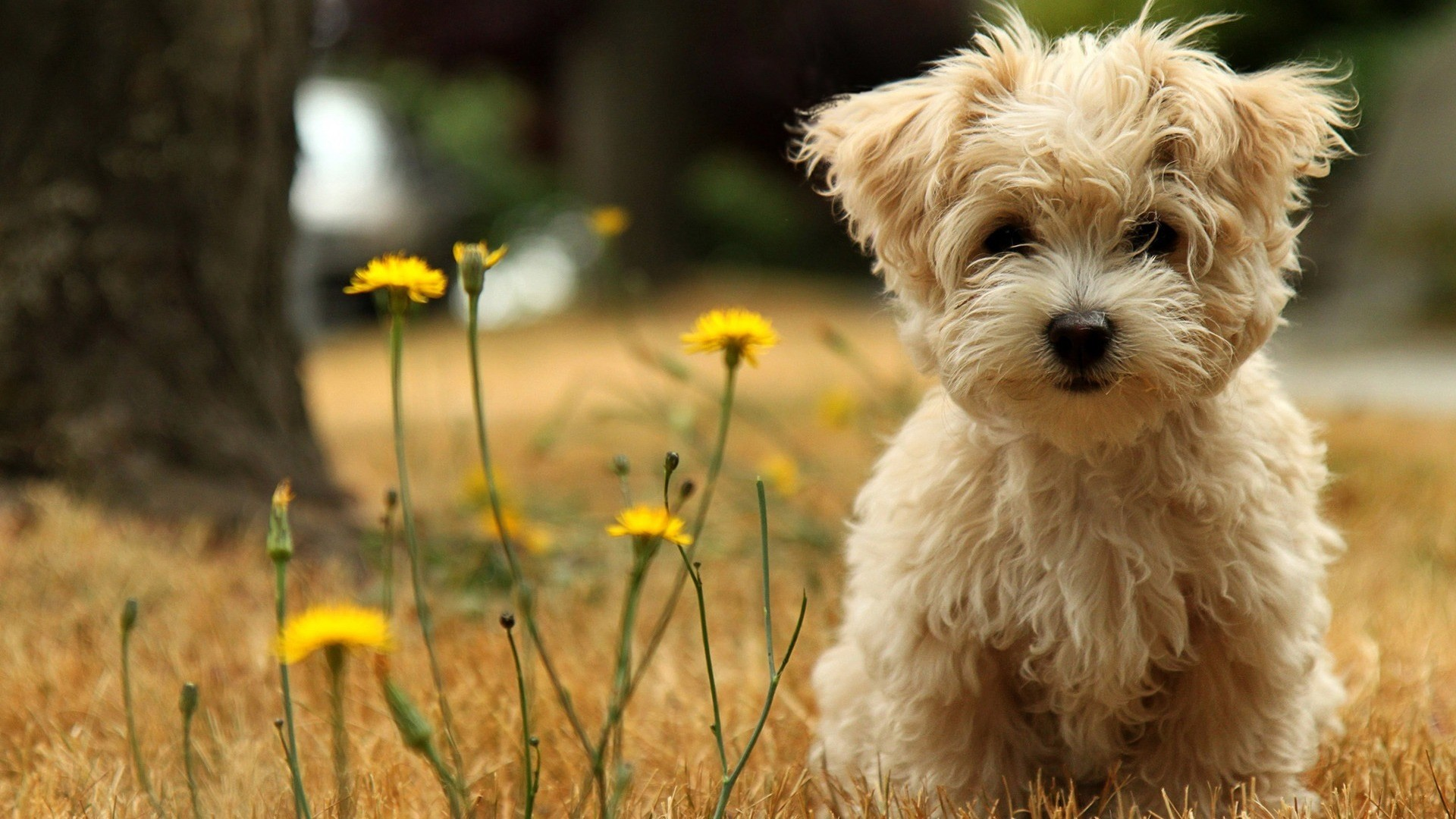 Res: 1920x1080, Free Cute Little Animals & Birds Desktop Wallpapers in HD Resolutions -  Page 1