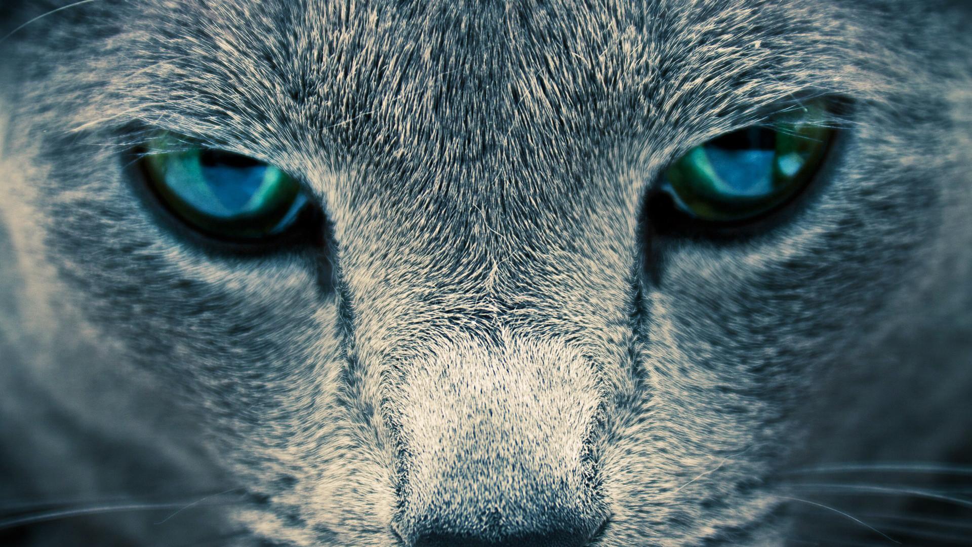 Res: 1920x1080, Blue Eyes