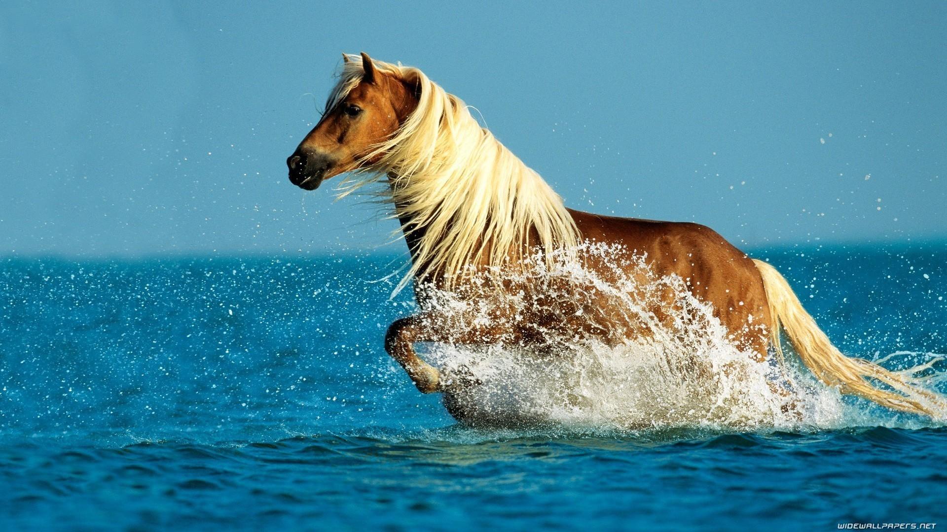 Res: 1920x1080, Horse In Ocean