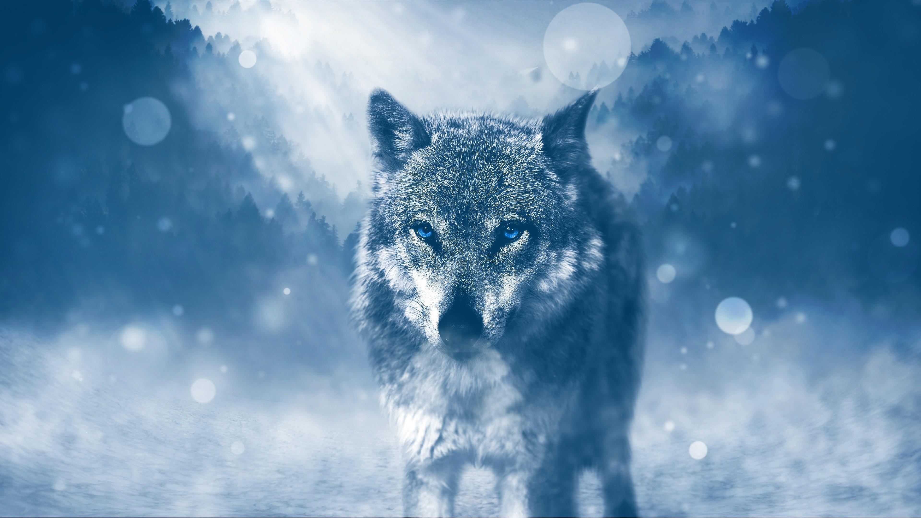 Res: 3840x2160, Winter Wolf Widescreen Wallpaper HD 62666