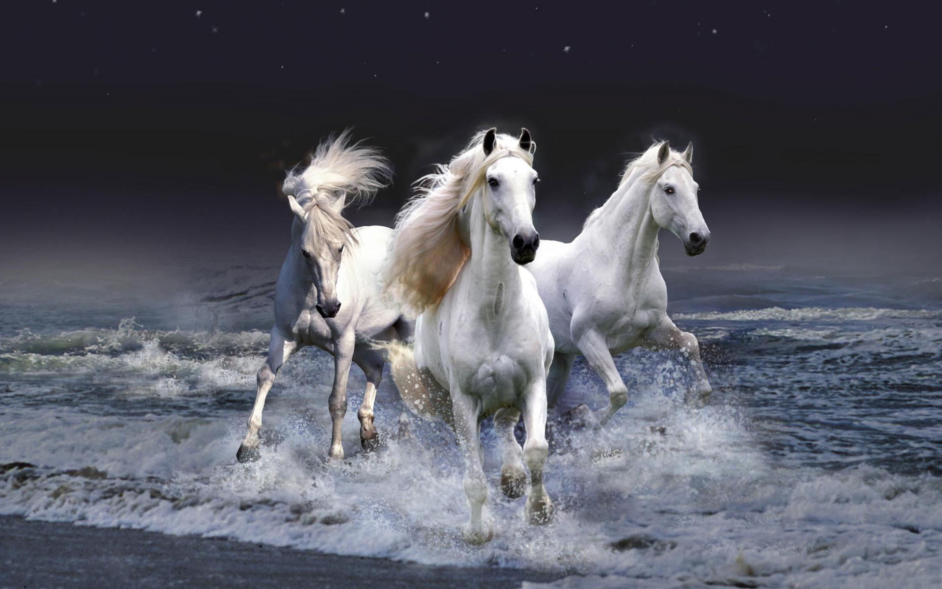 Res: 1920x1200, popular horse wallpaper hd