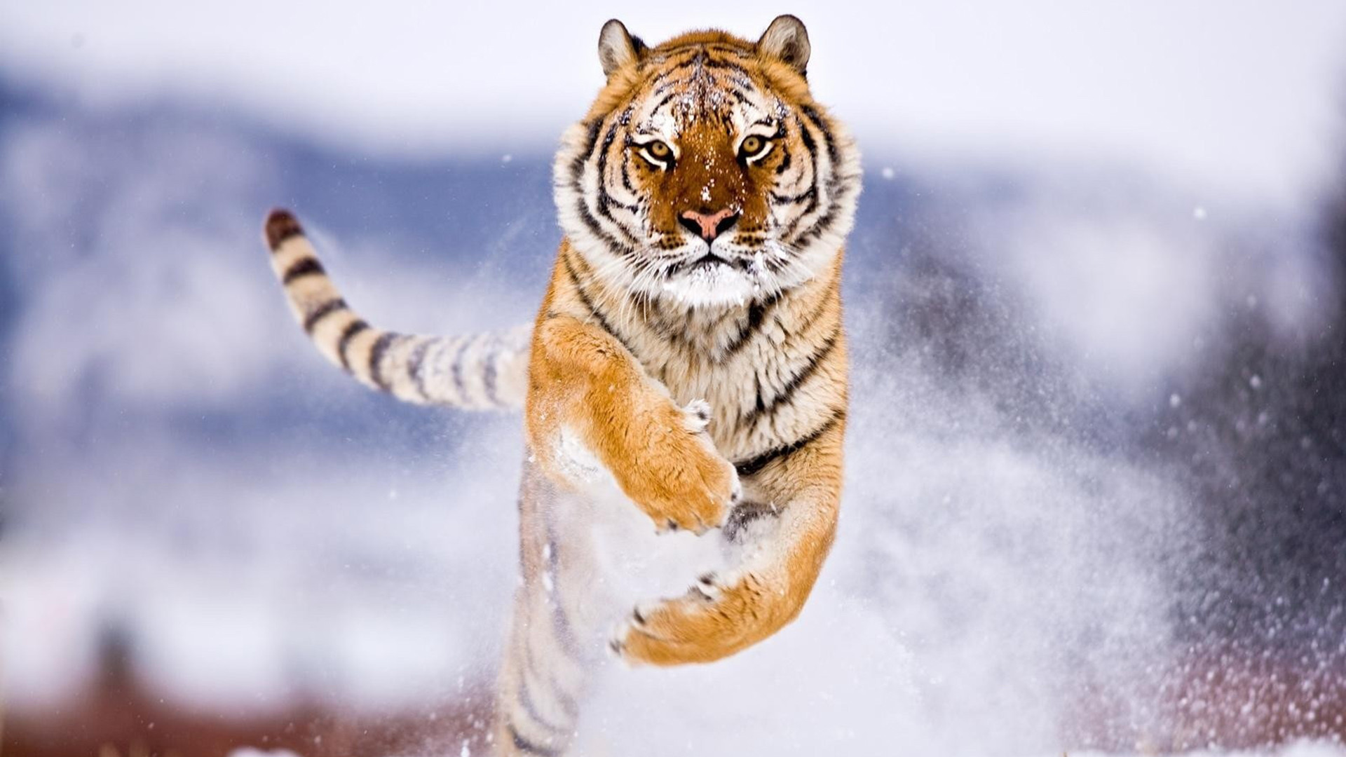 Res: 1920x1080,  Animal Full HD Wallpapers (36 Wallpapers)